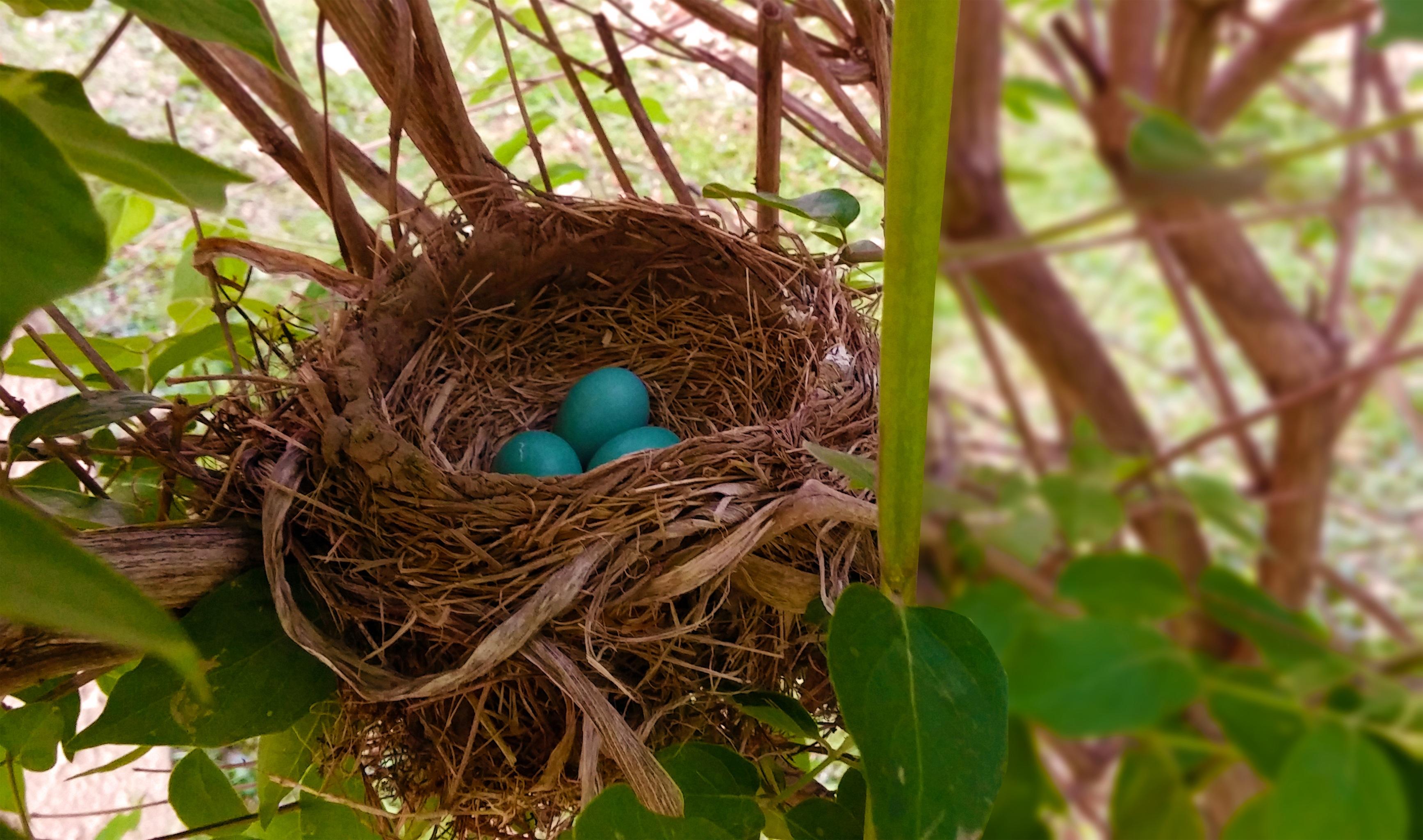 гнездо птиц фото говорить