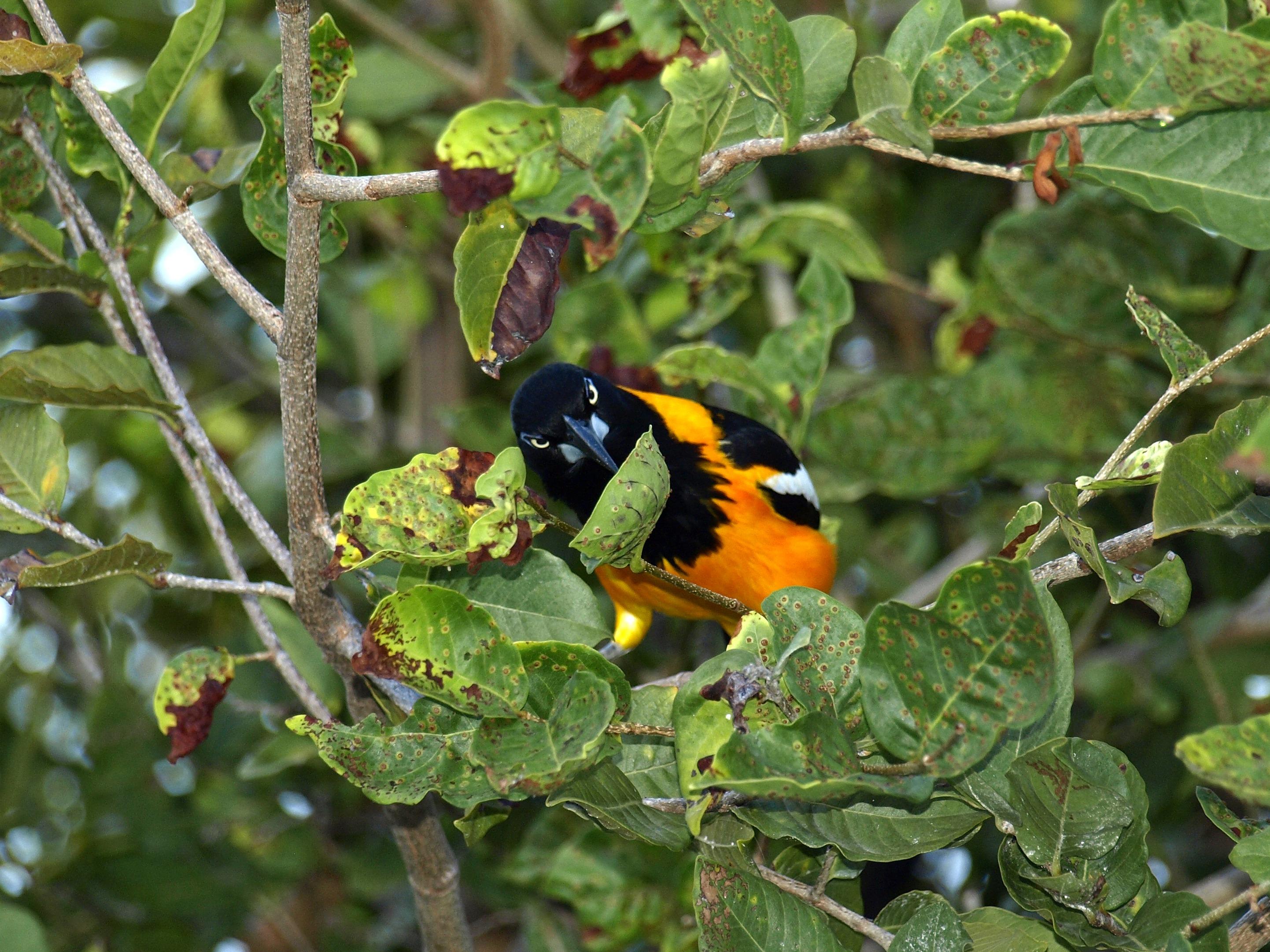 Images gratuites la nature branche oiseau fleur for Oiseau par la couleur