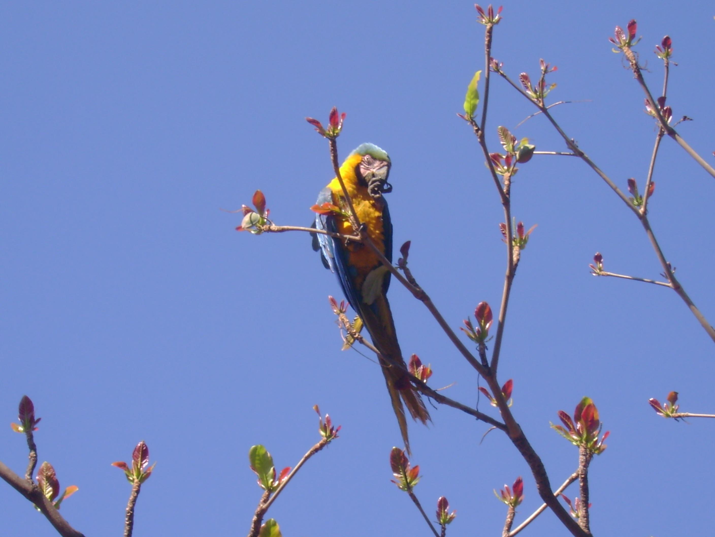 Immagini belle natura ramo cielo fiore ambiente - Primavera uccelli primavera colorazione pagine ...