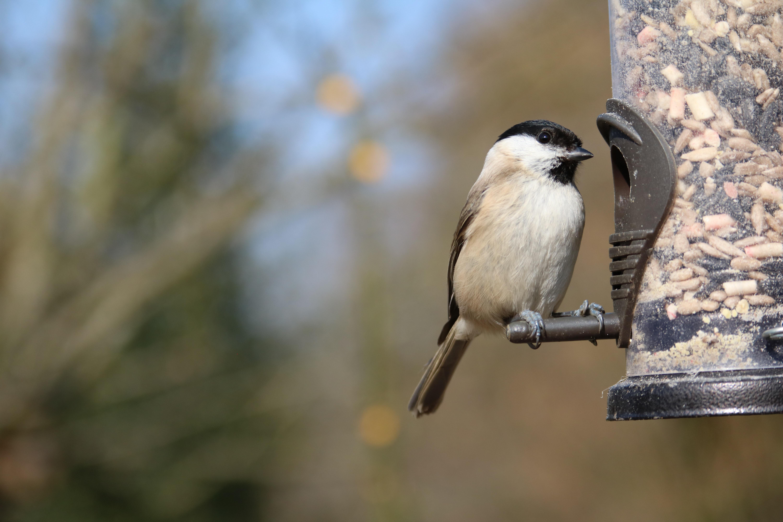 Gratuites la nature branche oiseau faune le bec