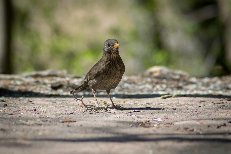 Δωρεάν πουλί φωτογραφίες