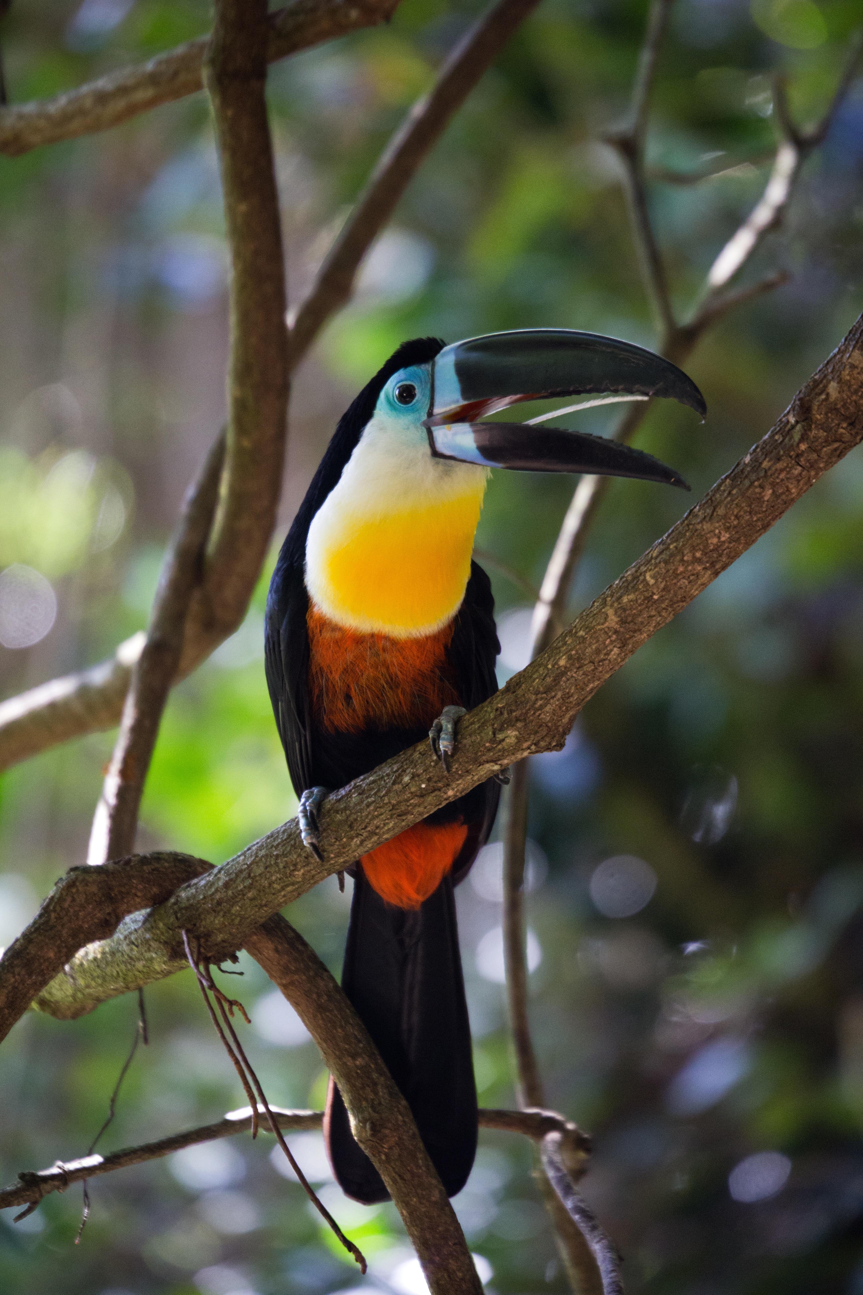 материалов тропические птицы картинки тех пор