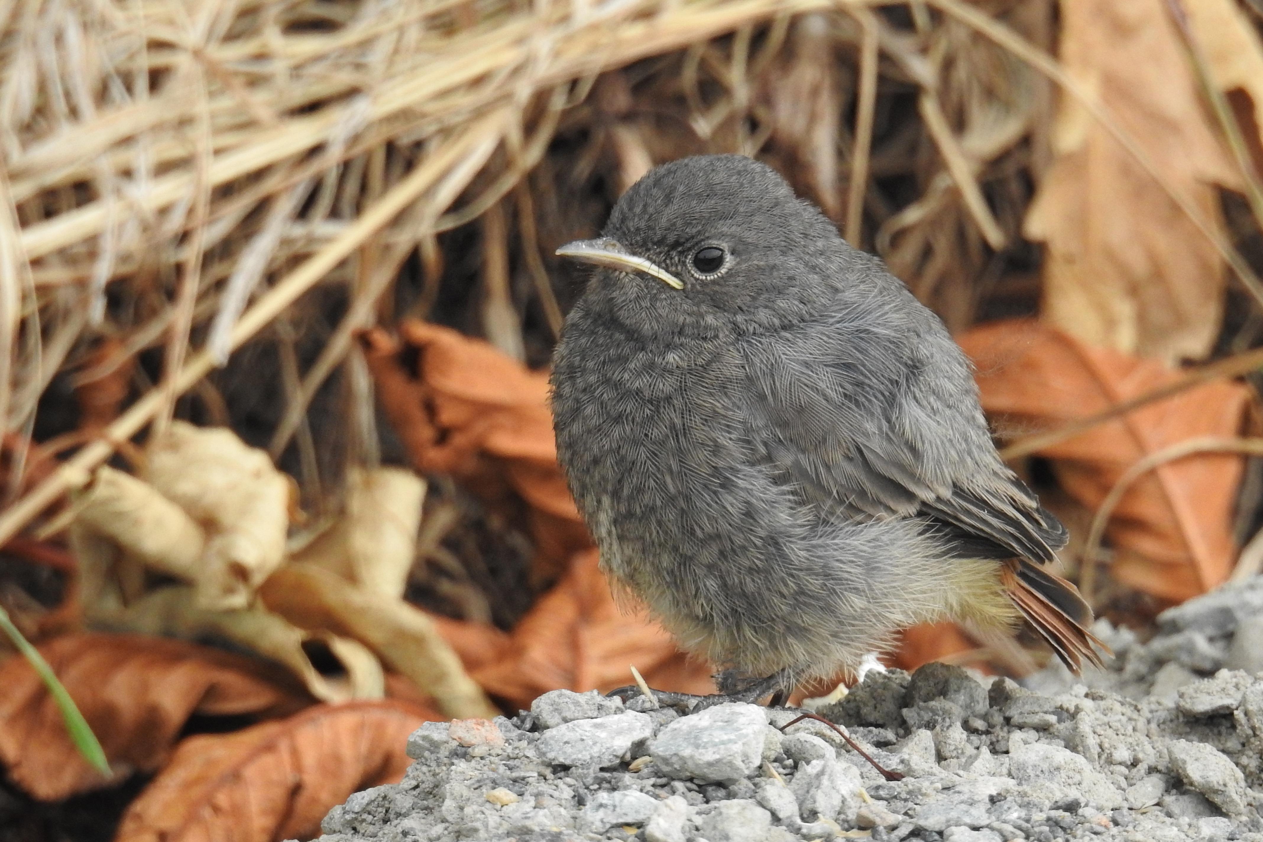 Картинки птиц маленьких размеров
