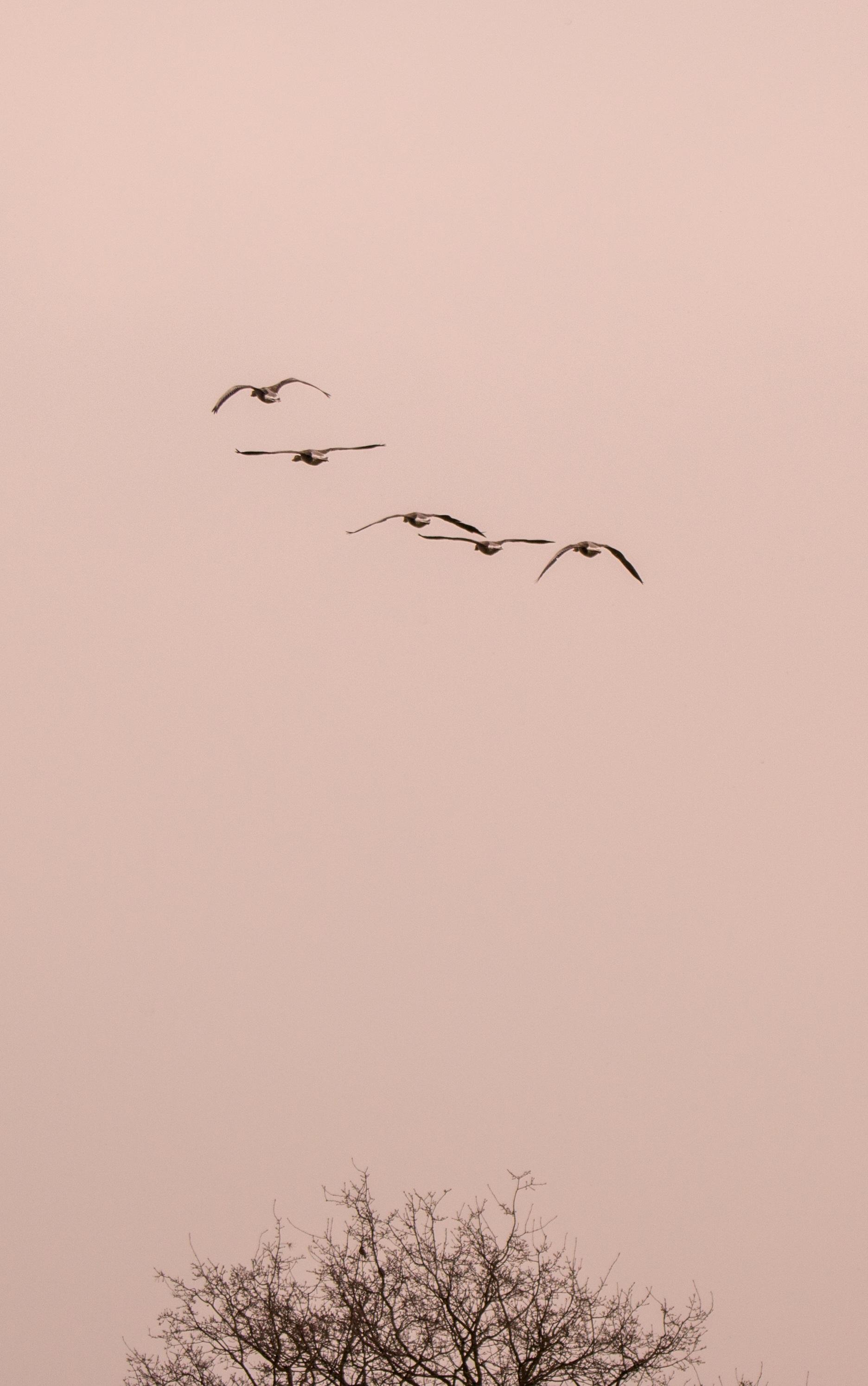 Images gratuites la nature branche aile animal troupeau mouche vol dessin illustration - Oiseau mouche dessin ...