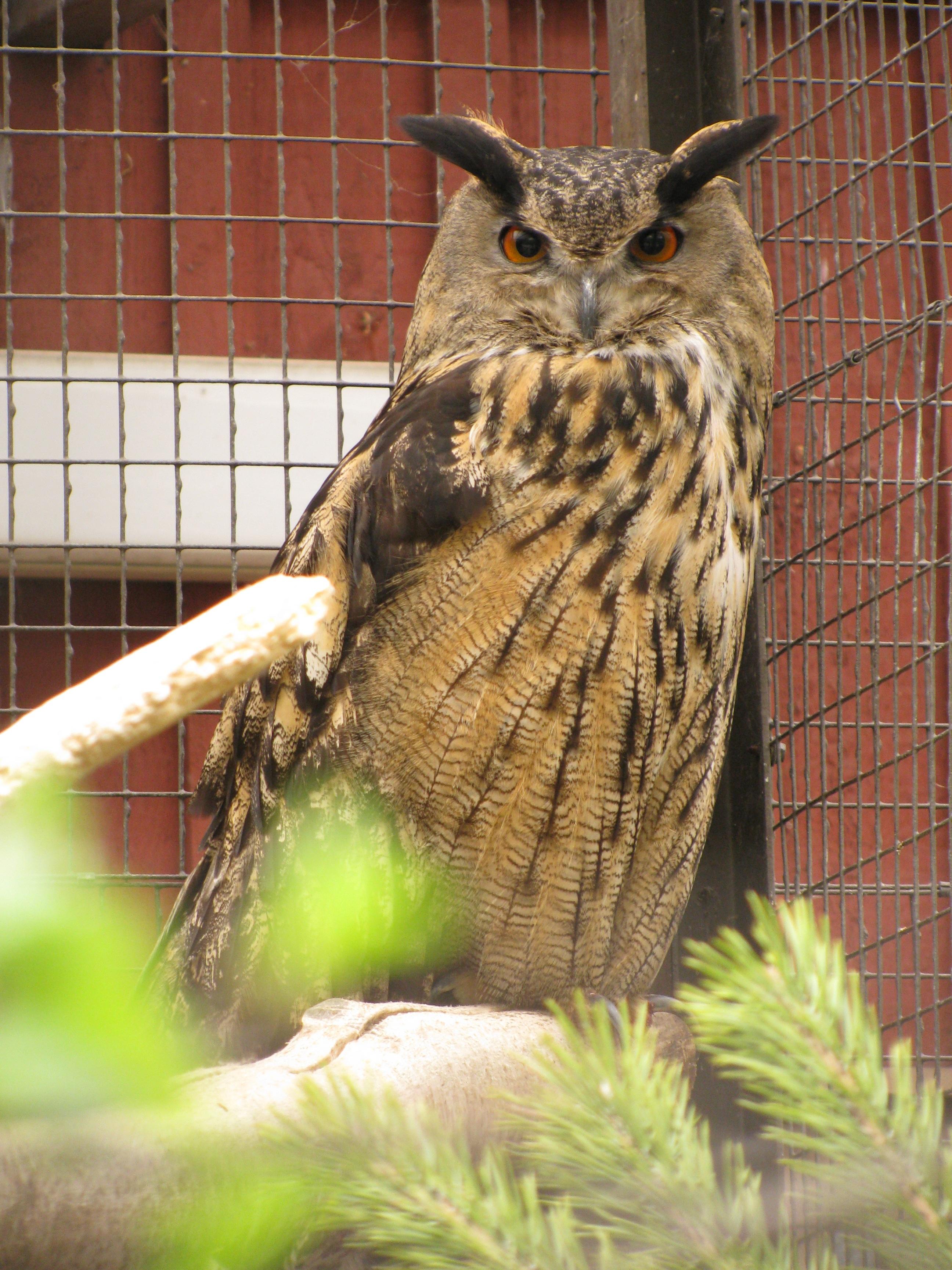 Free Images : nature, branch, wing, animal, wildlife, beak, fauna ...