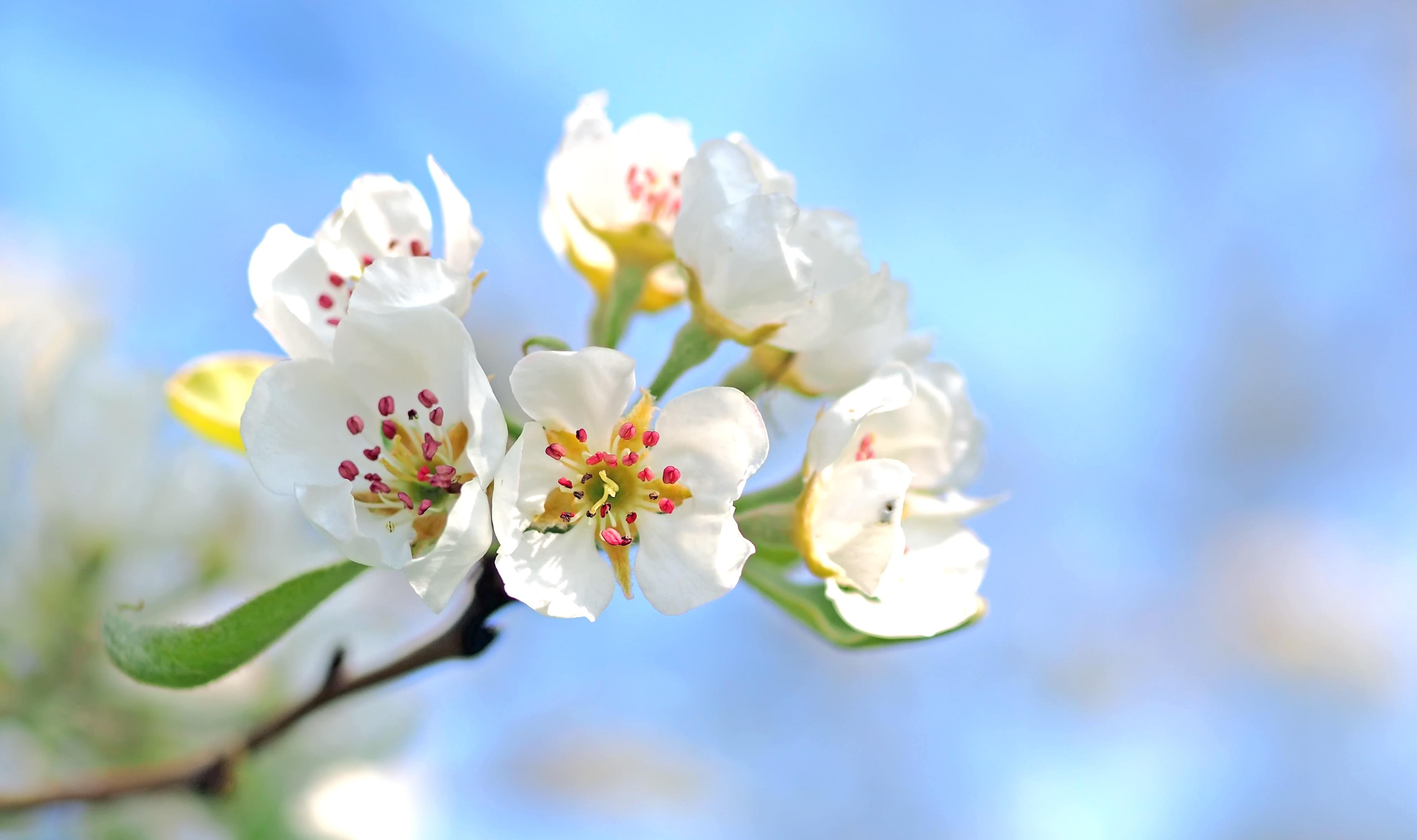 Free Images : nature, branch, blur, growth, fruit, leaf, petal ...