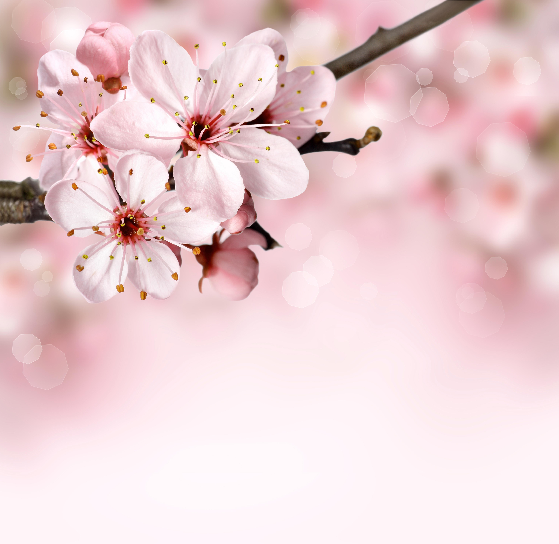 Free Images Nature Branch Bokeh Flower Petal Bloom Summer