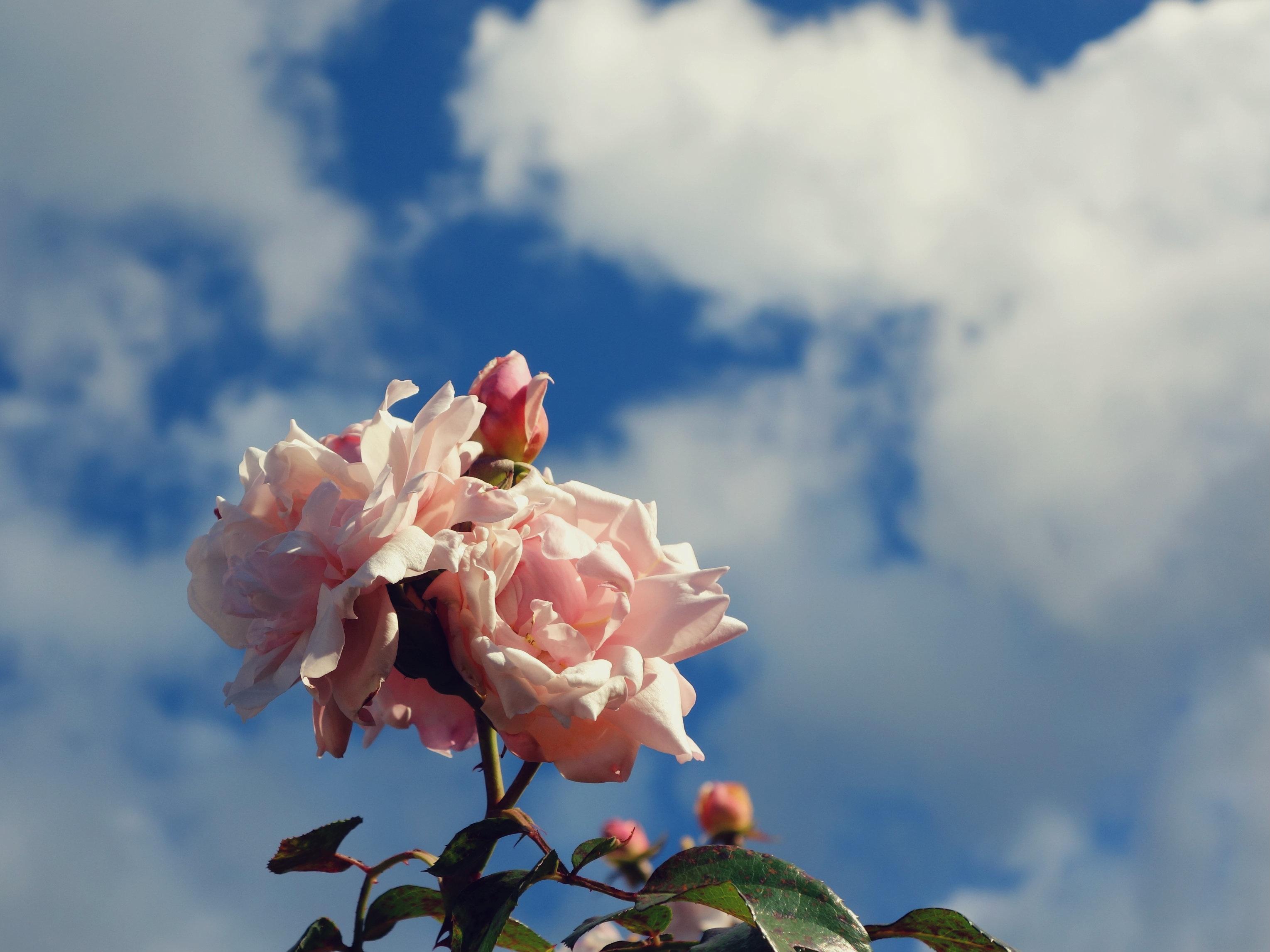нежное облако цветов фото ней