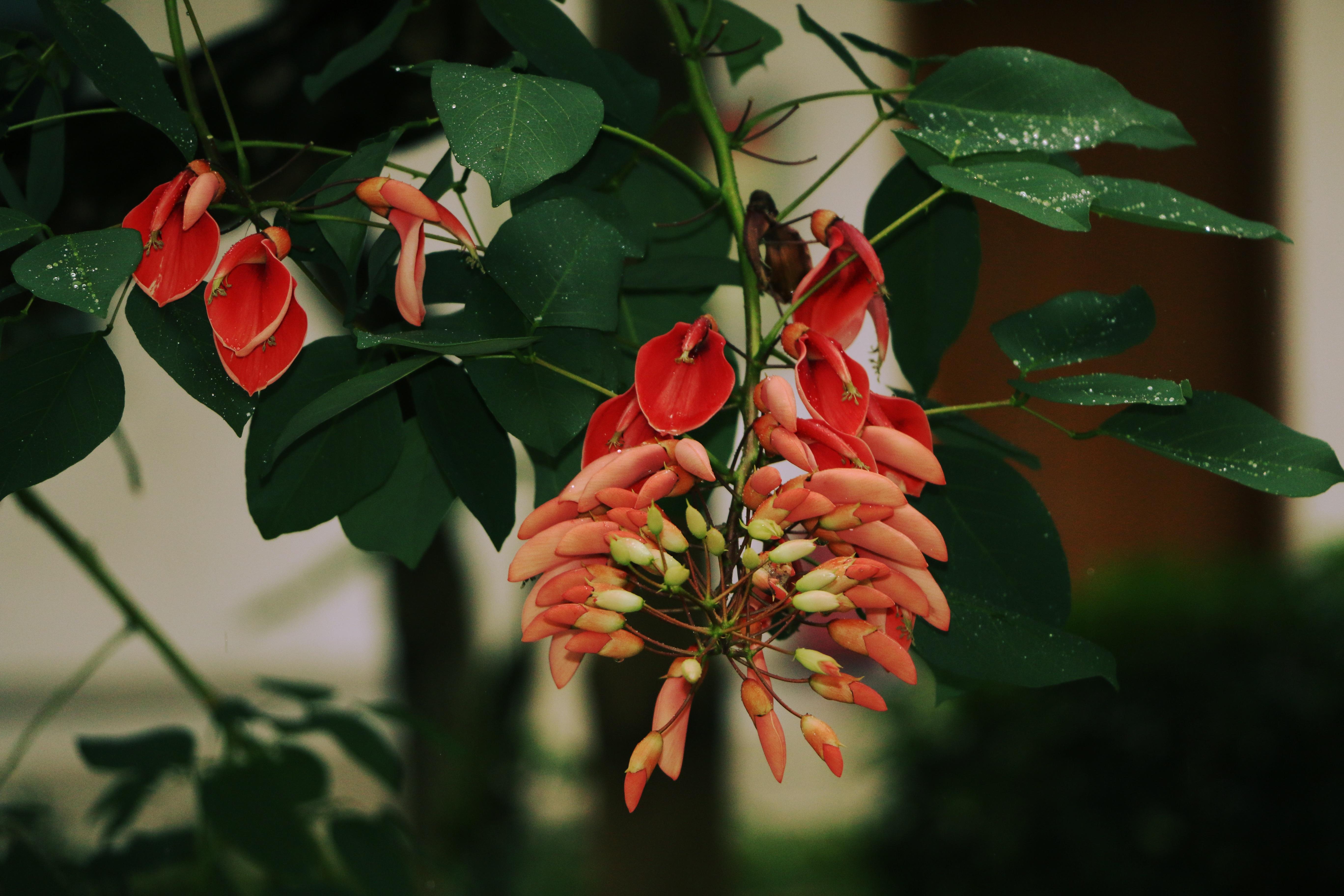 images gratuites : la nature, branche, fleur, rosée, vert, rouge