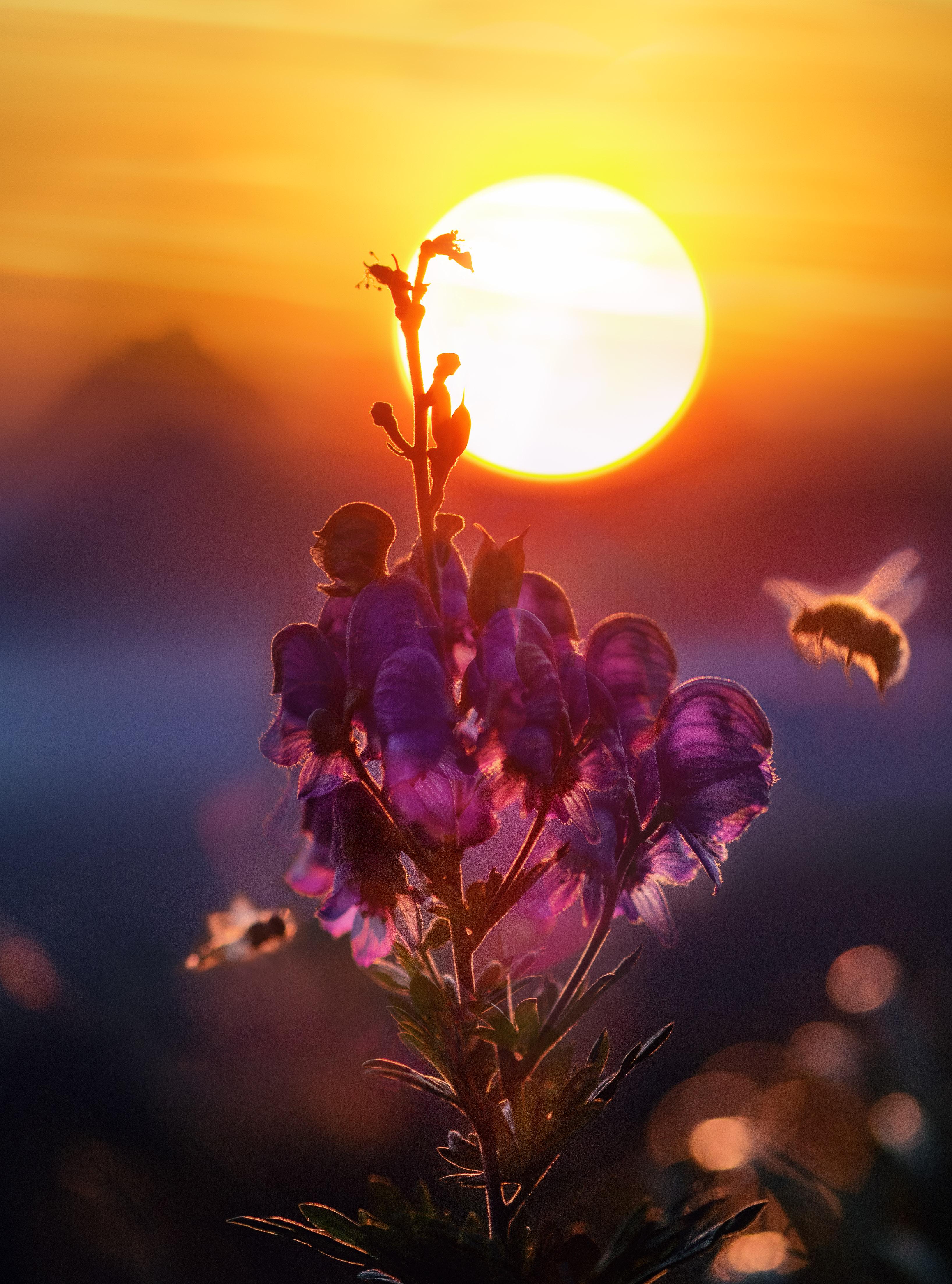уже картинка солнечного вечера время