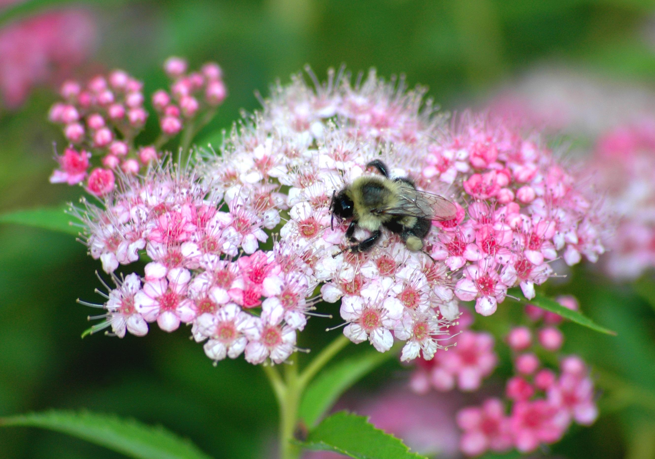 banco de imagens ramo flor plantar flor plen primavera erva inseto macro flora flores silvestres canteiro de flores asas