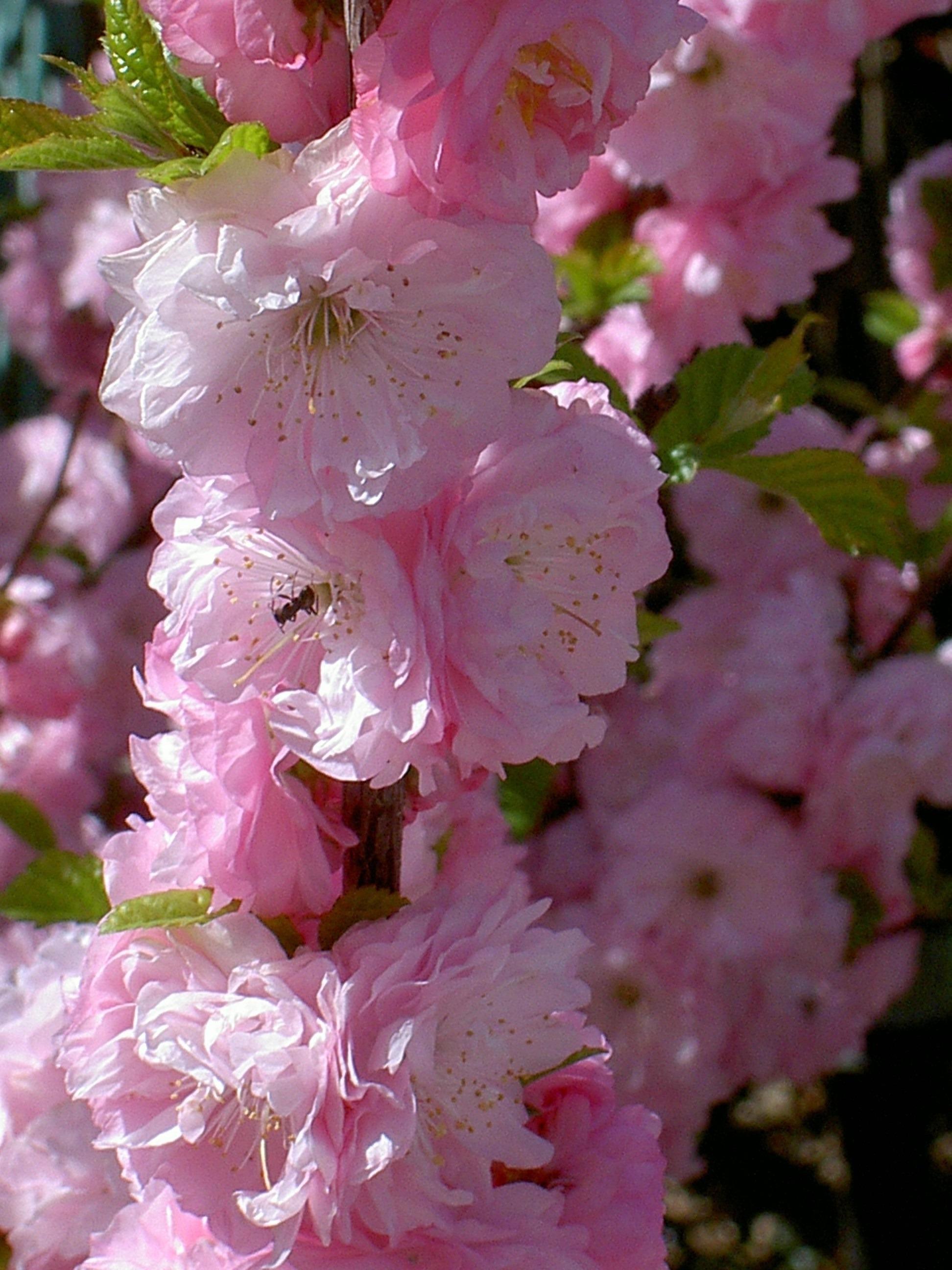 этом центр куст розовые цветы фото анорексии умирают гораздо