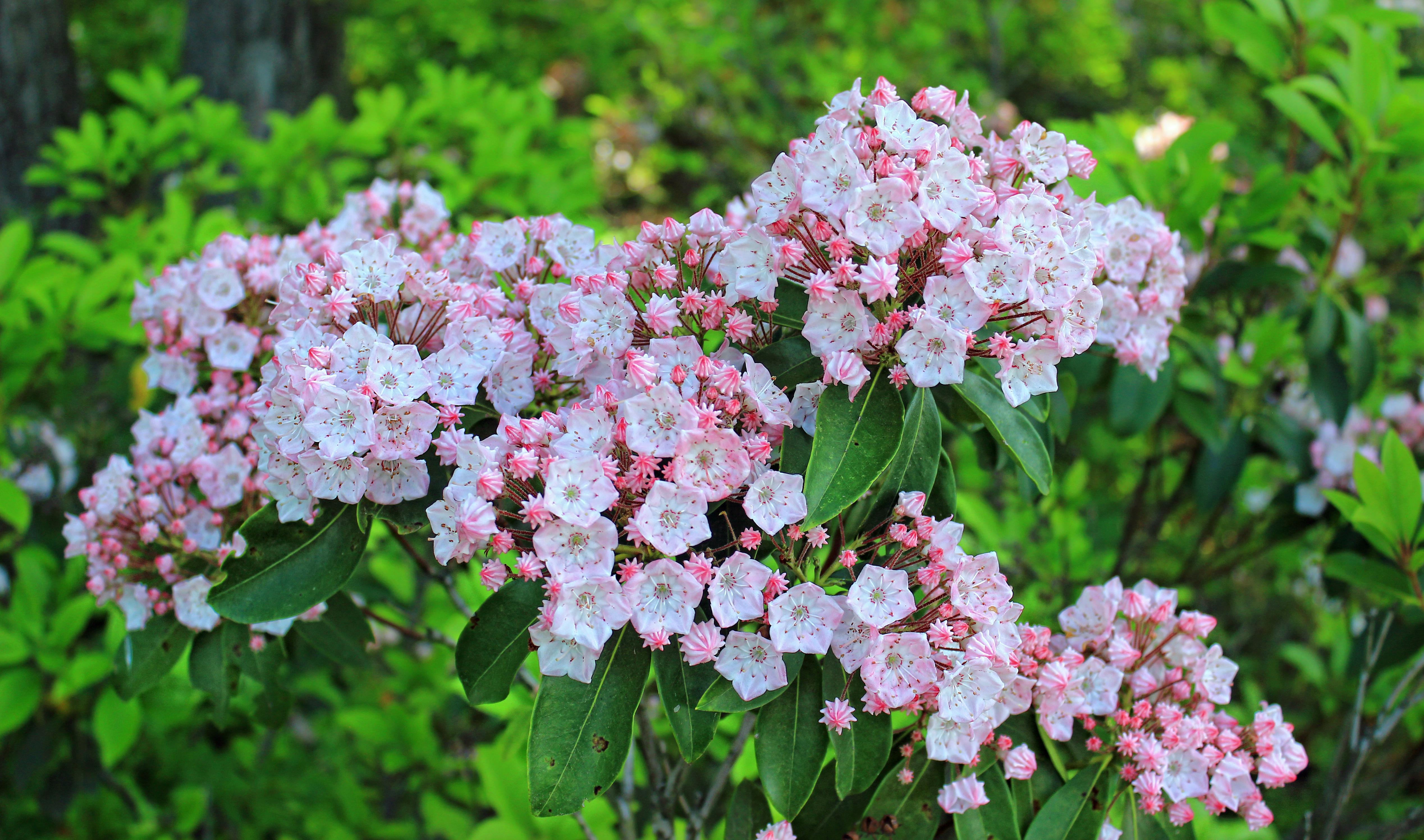 banco de imagens natureza ramo flor plantar flor vero botnica jardim flora flores silvestres flores sai cc domnio pblico arbusto