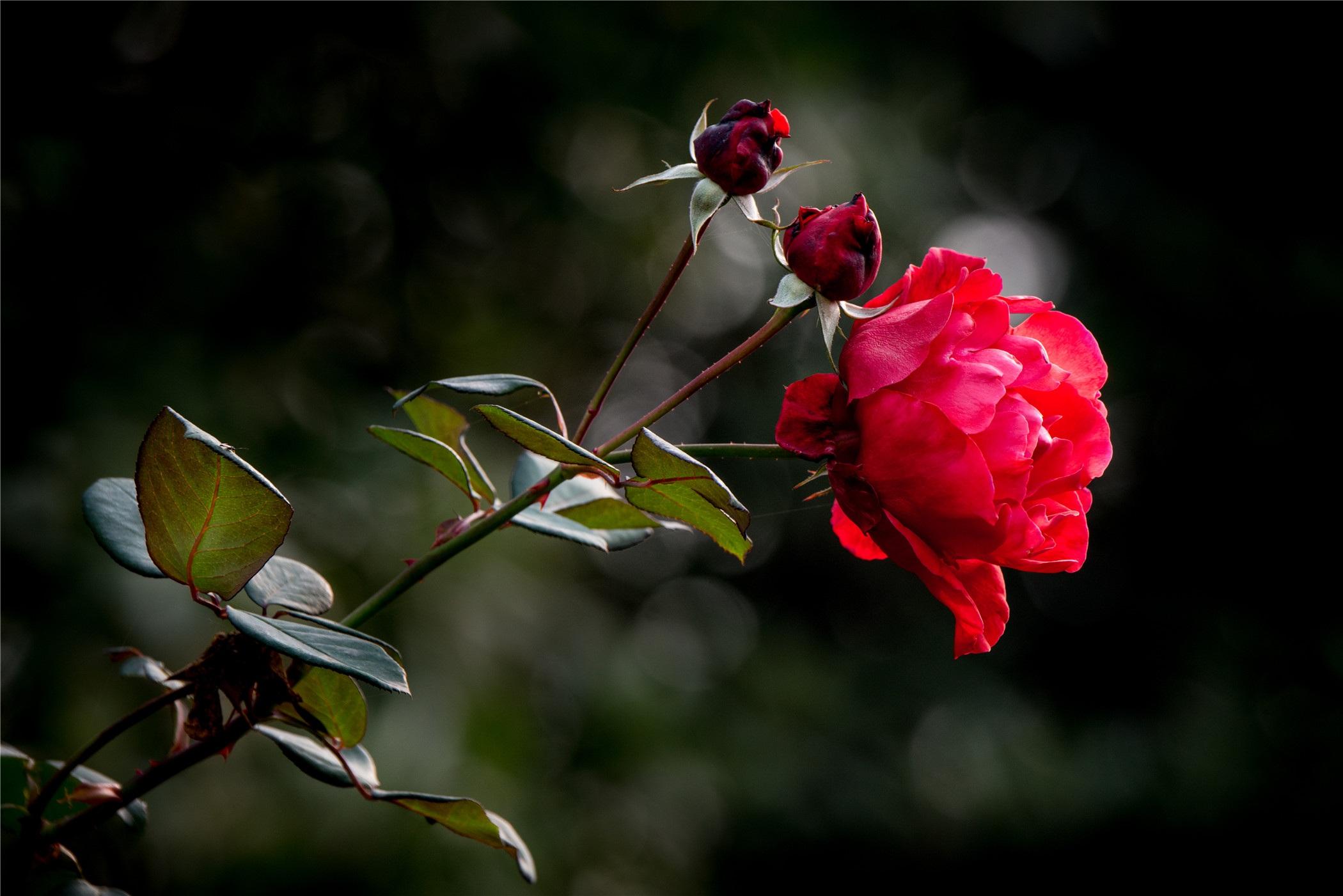 фото цветка любви сразу