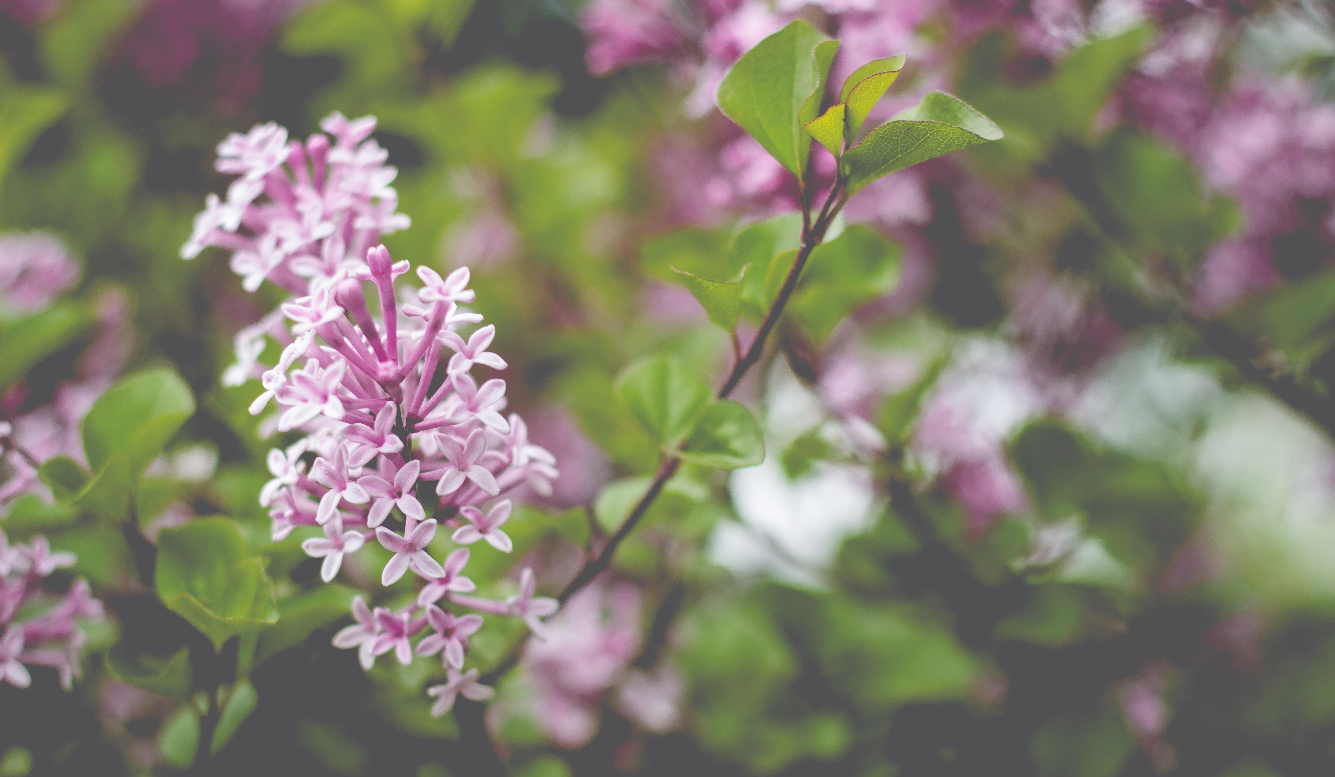 natureza ramo flor plantar folha flor roxa flor primavera erva botnica jardim flora flores silvestres arbusto