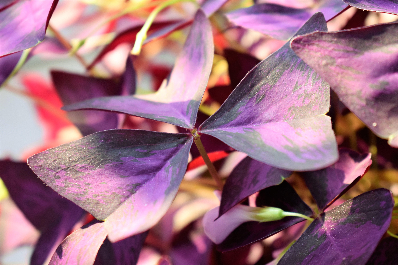 plante verte bordeaux