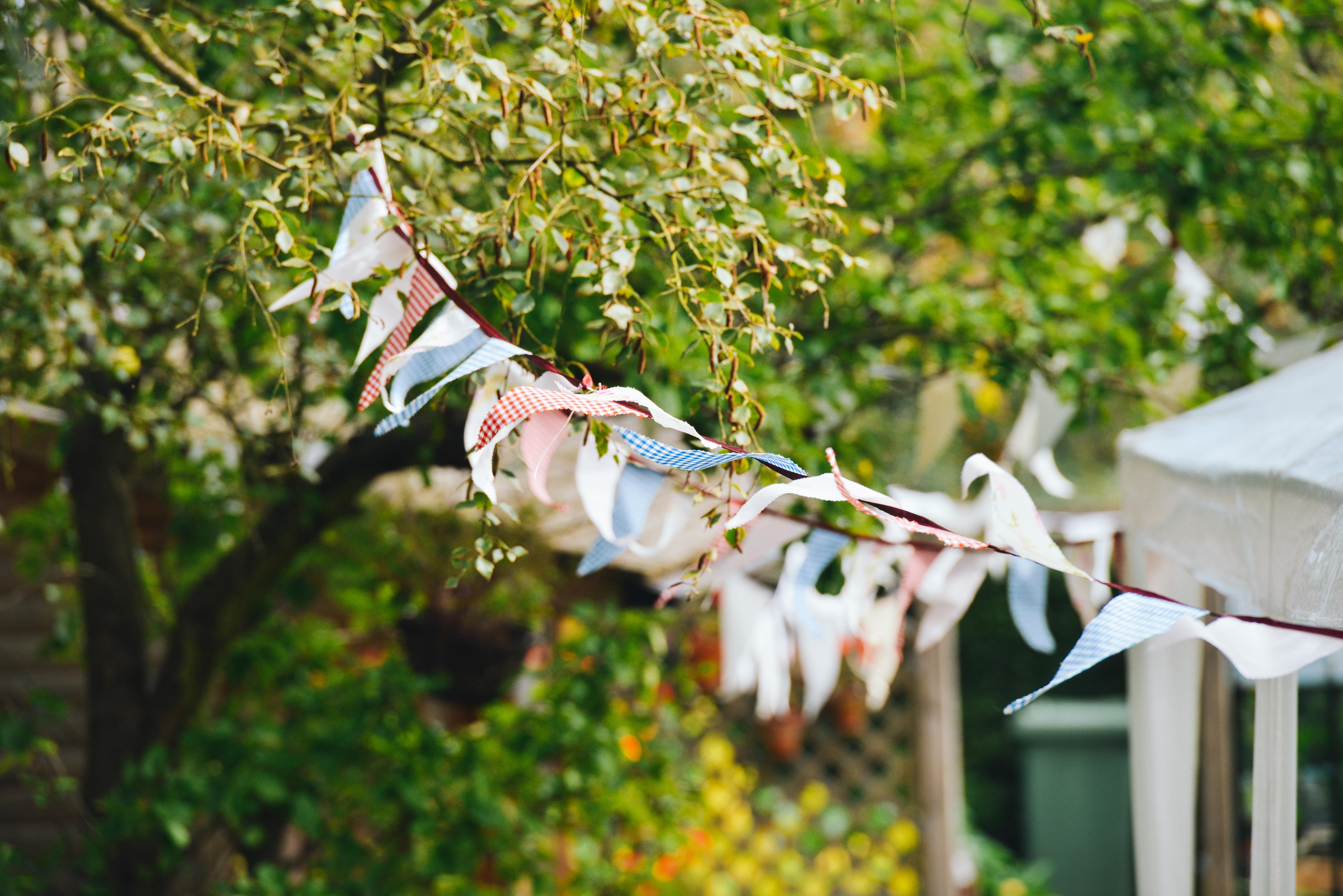 Free Images : nature, branch, blossom, plant, leaf, flower, wind ...