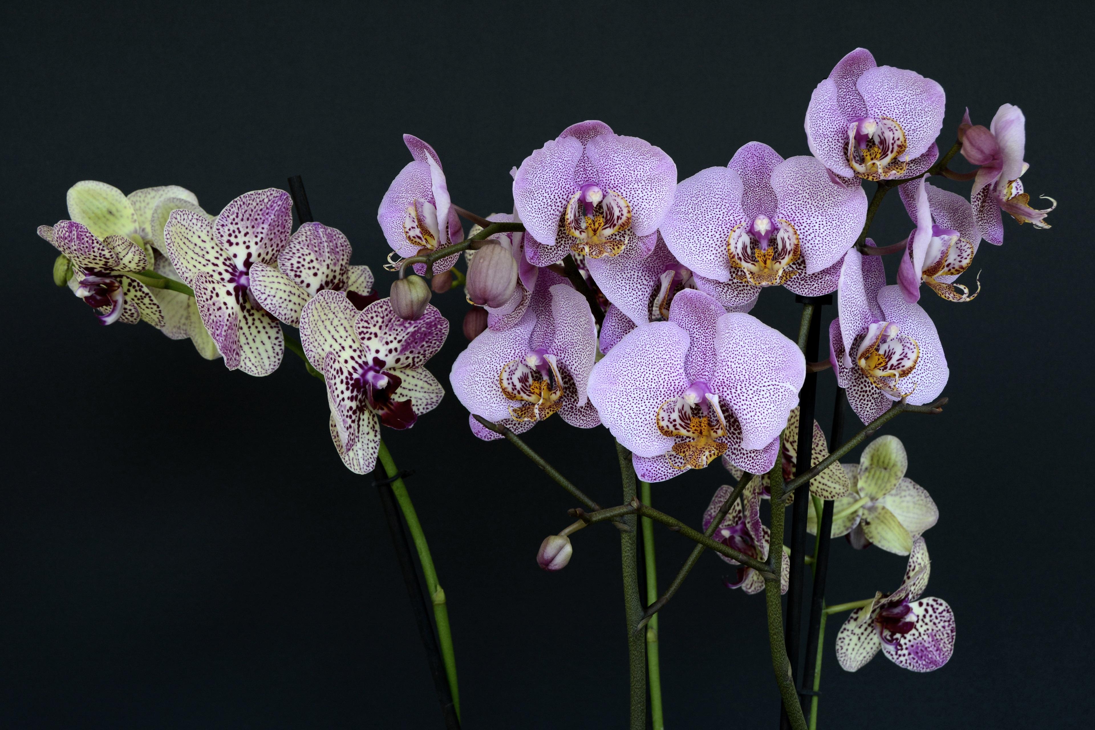будет оригинальные фото орхидей своих работах