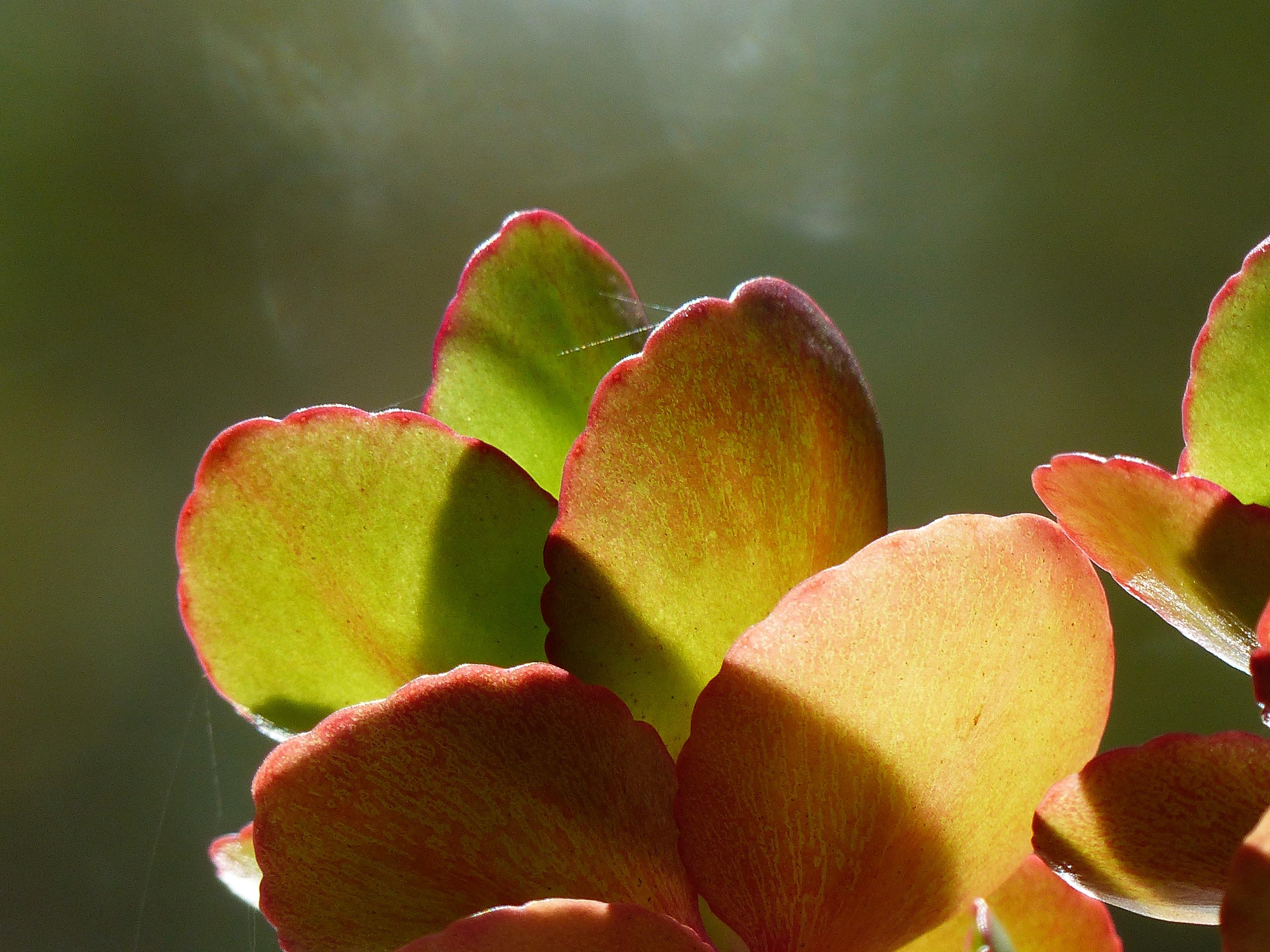 free images nature branch blossom leaf flower petal green