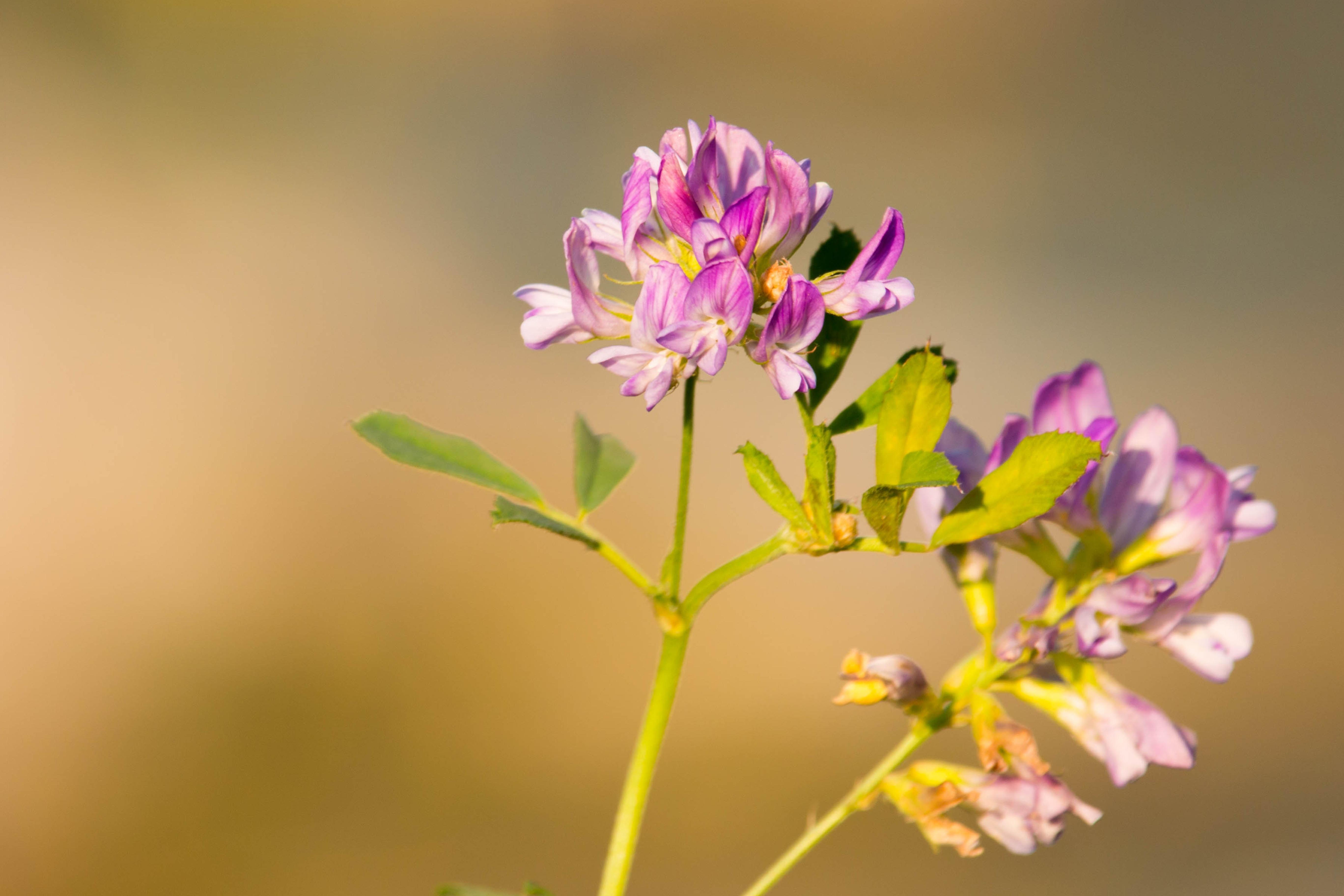 Yellow Pink Flora Wild Flower Wildflower Close Up Purple Nectar Filigree Macro Photography Flowering Plant Small
