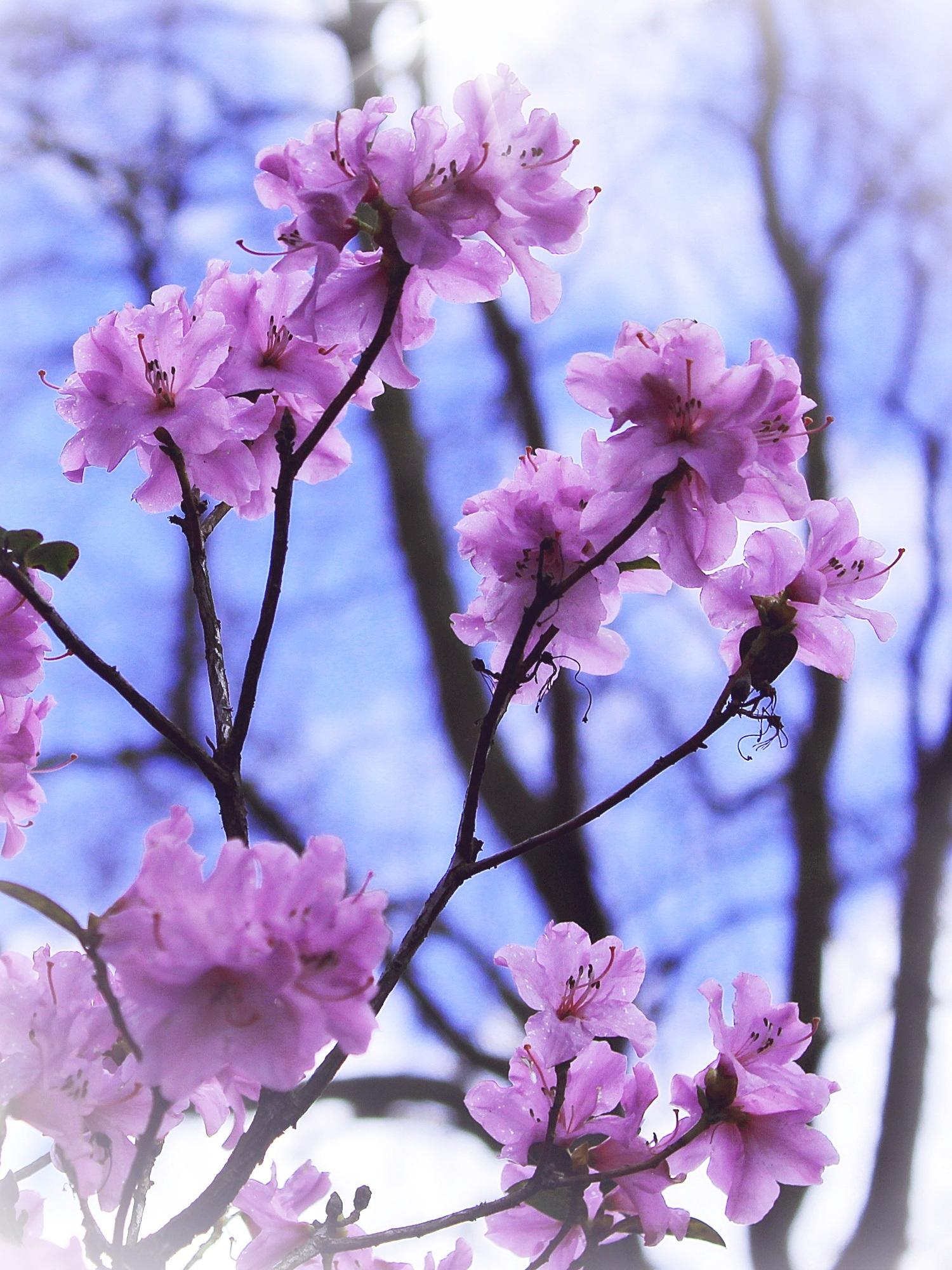Free Images Nature Branch Sky Sun Flower Petal Bloom Bush