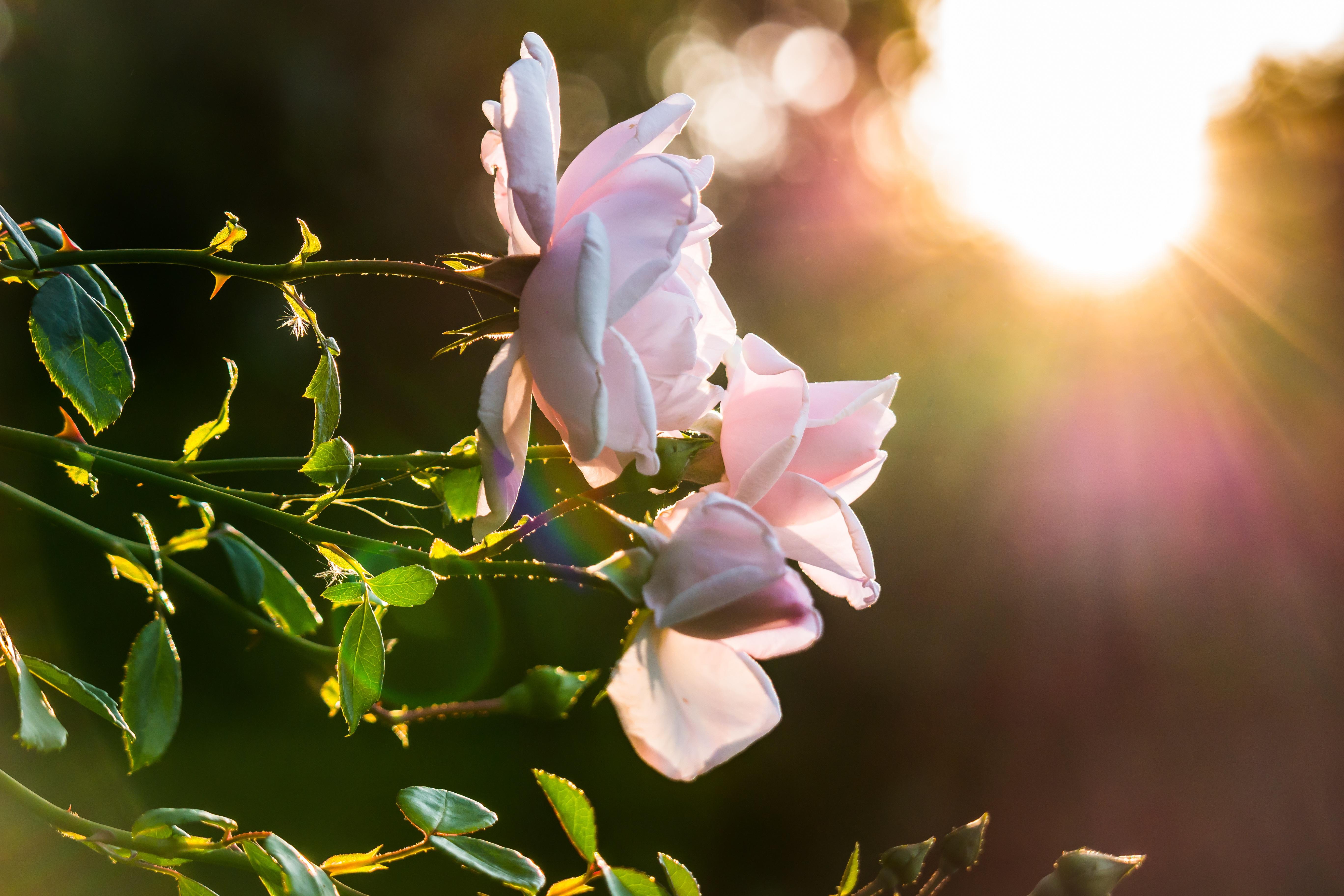 Gambar Alam Cabang Mekar Menanam Matahari Terbenam Sinar
