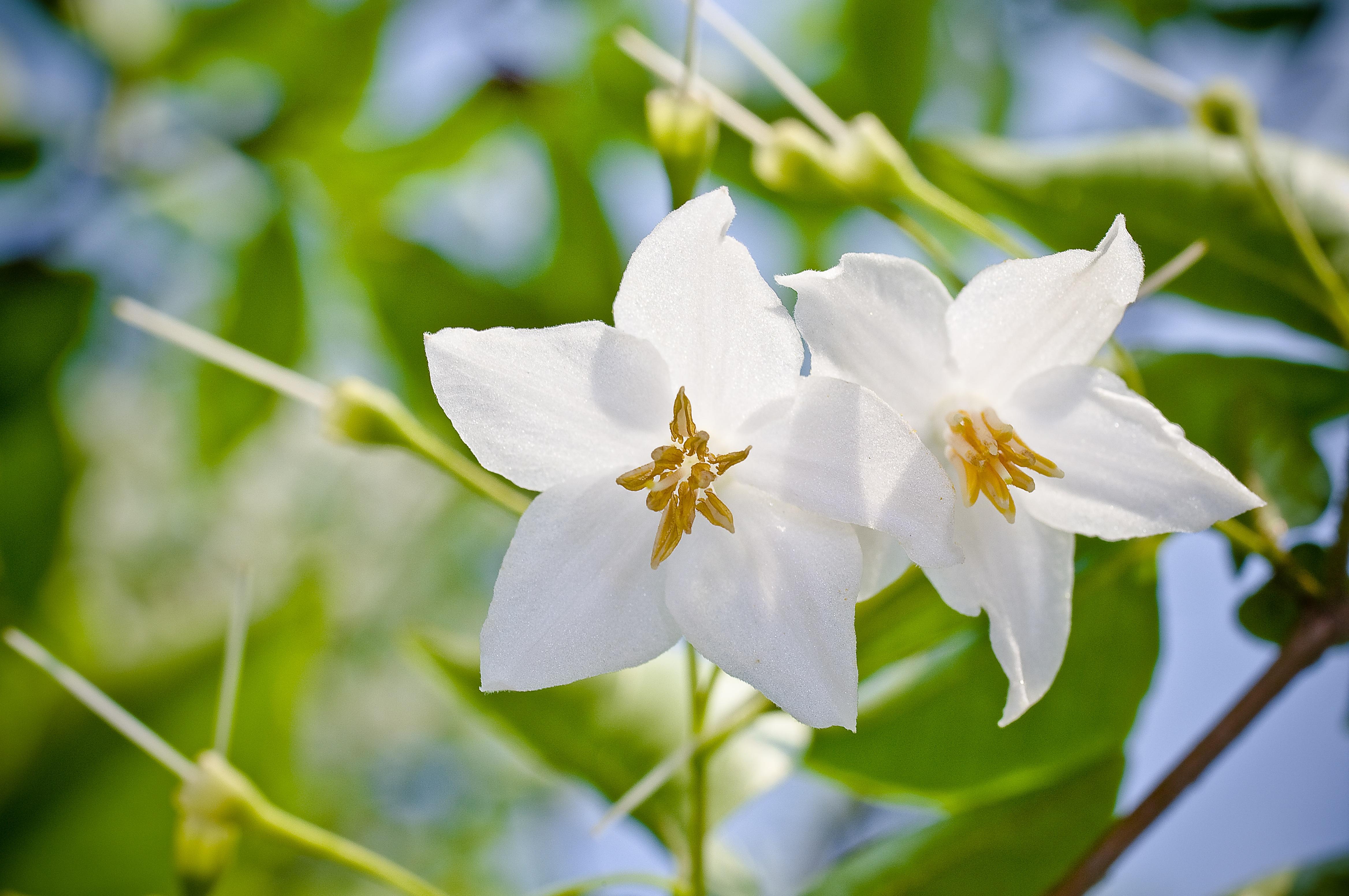 Free Images Nature Branch Blossom Sunlight Petal Autumn