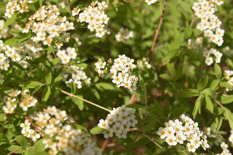 Images Gratuites La Nature Branche Fleur Blanc Aliments