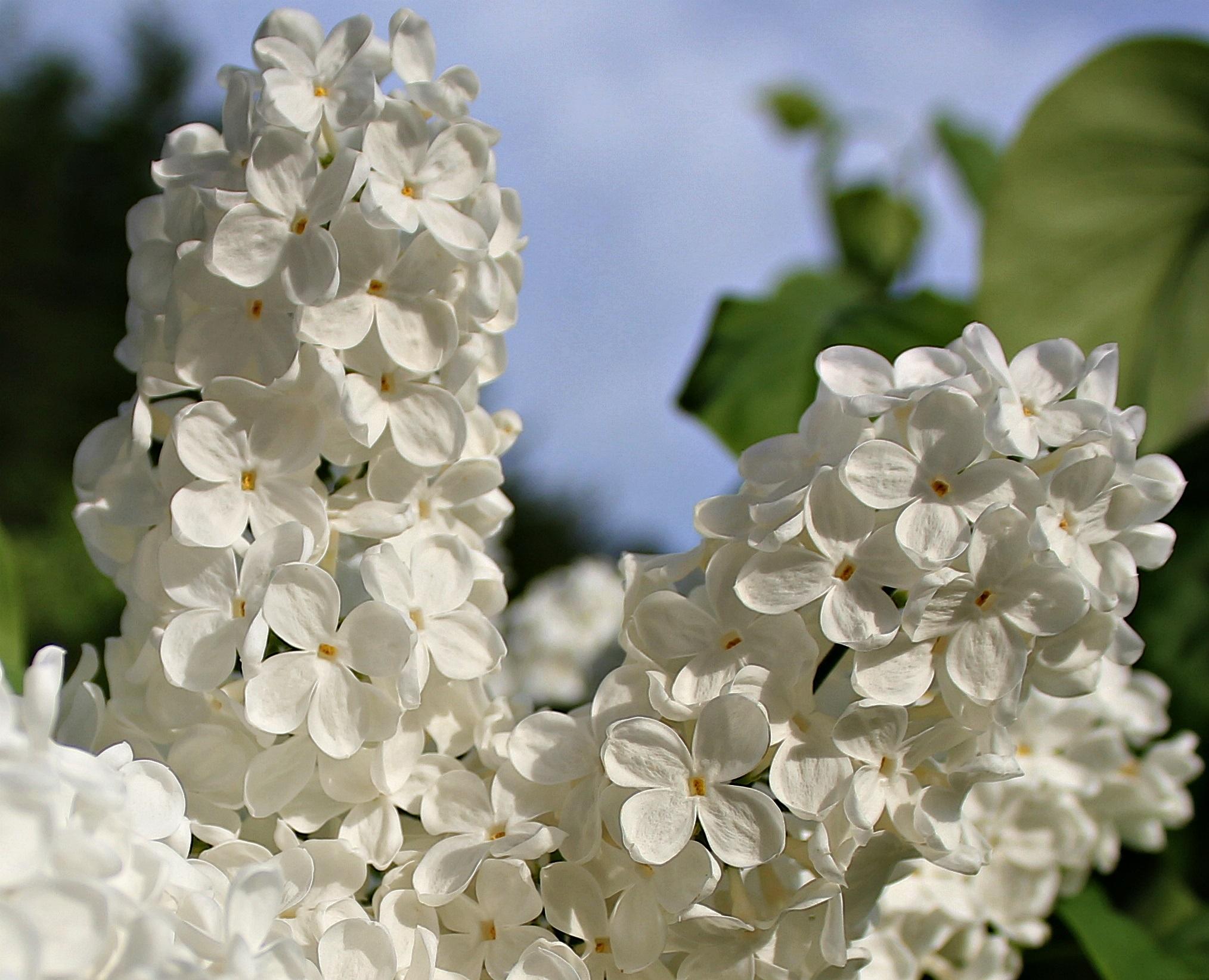 Free Images Nature Branch Blossom Petal Bloom Spring Botany