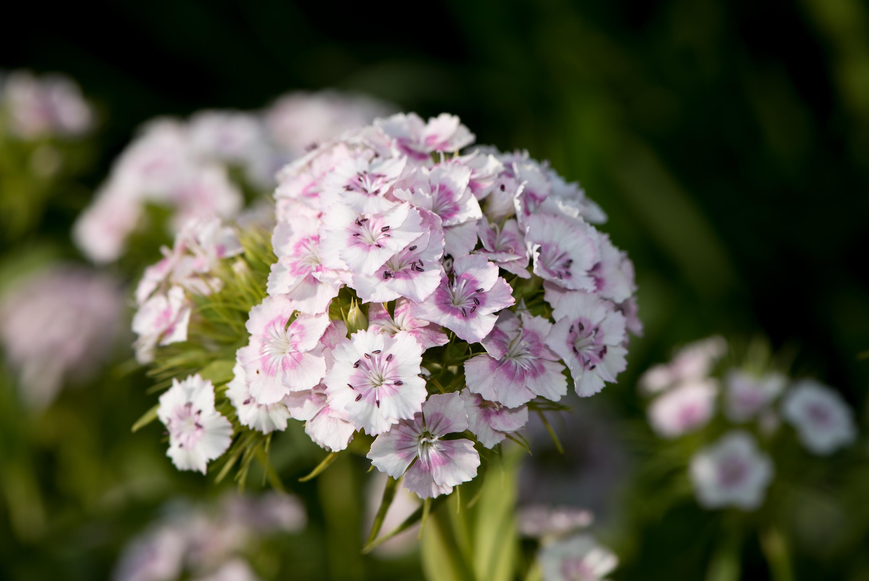 Free Images Nature Branch Blossom White Flower Petal Summer