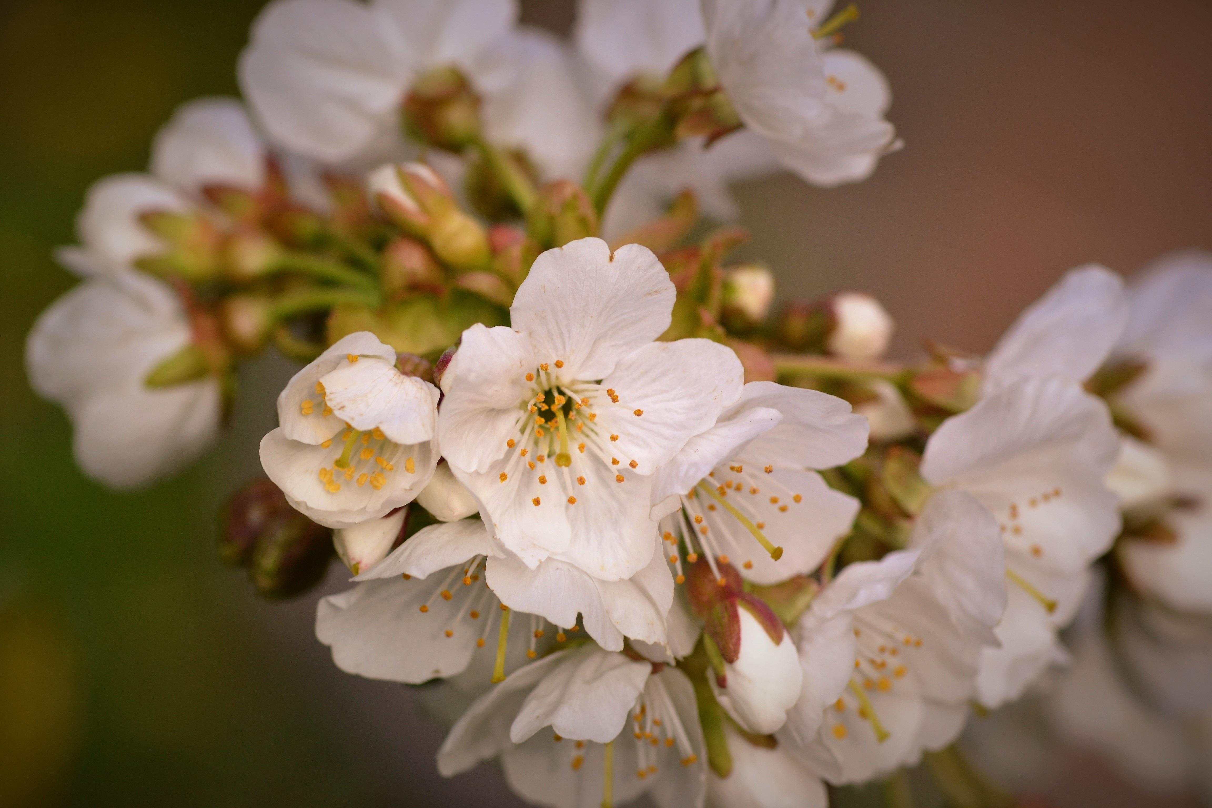 Free Images Nature Branch Fruit Flower Petal Bouquet Food