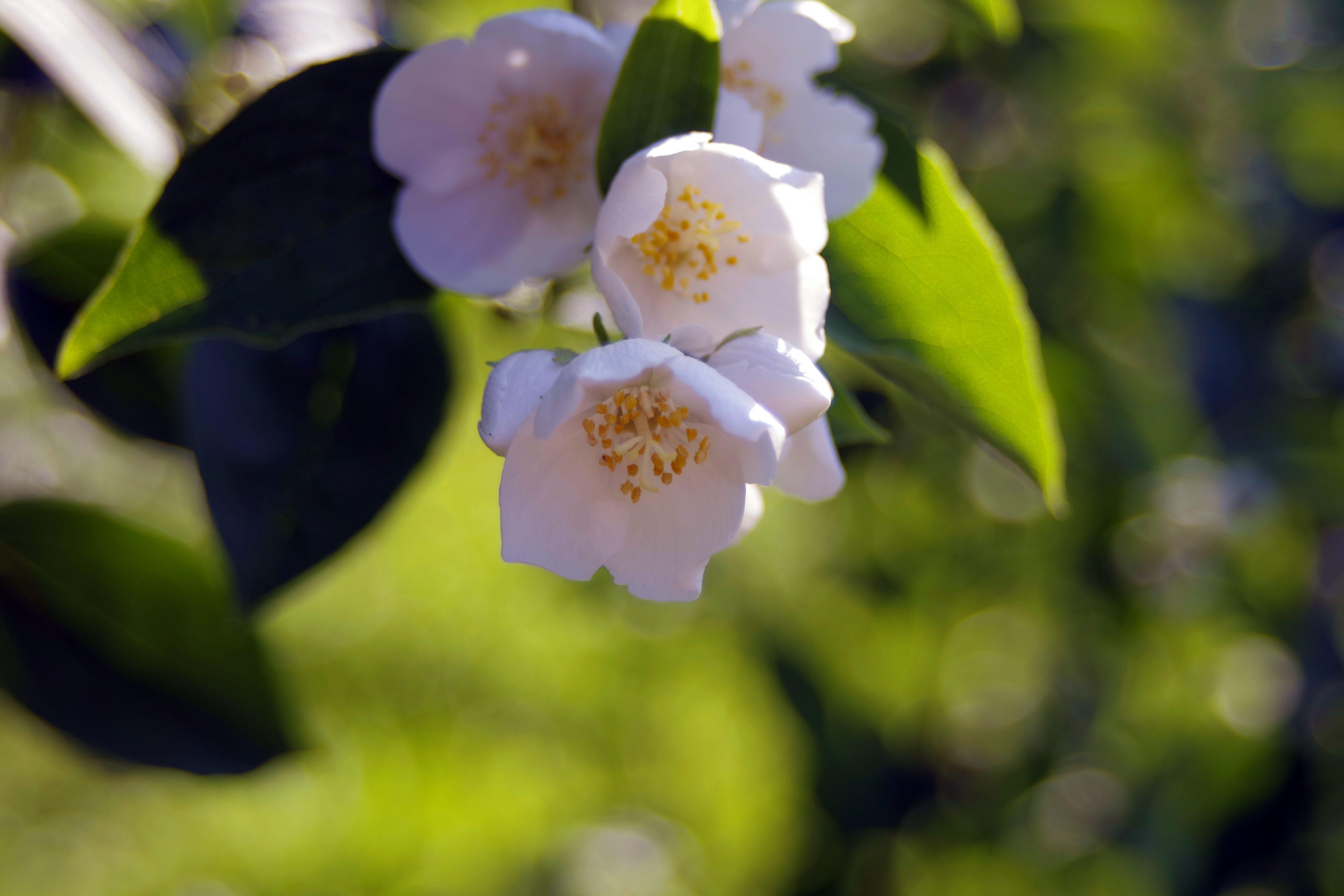 Free Images Nature Branch Blossom Leaf Petal Green Botany