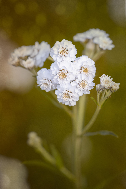 Free Images Nature Branch Blossom Sunlight Leaf Flower Petal
