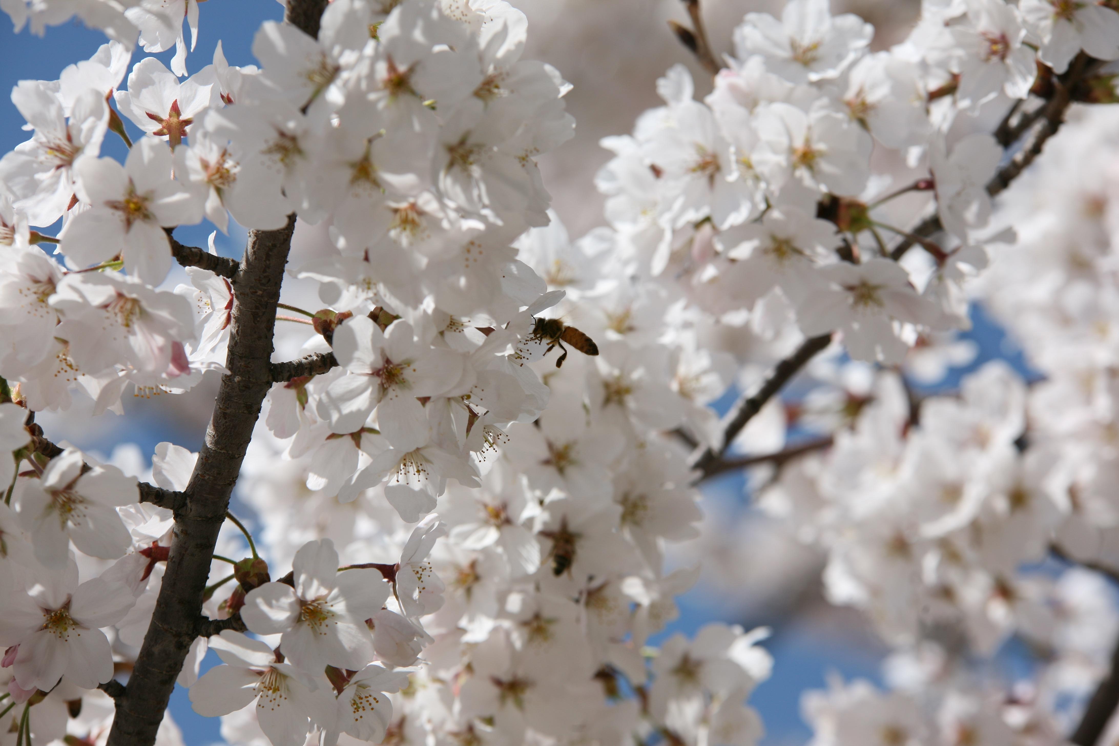 коже расцветающие весенние цветы в картинках викторианской англии