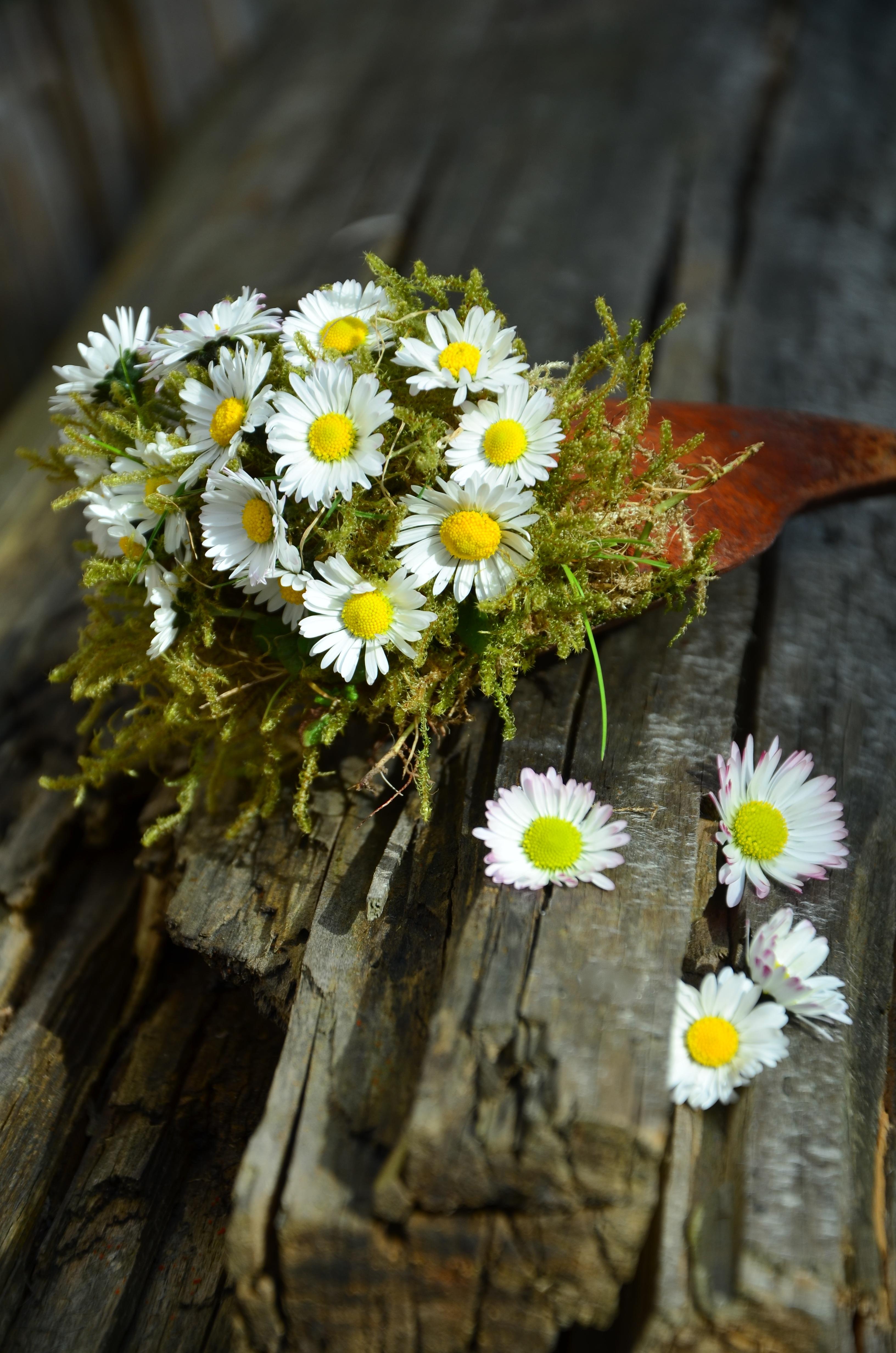 Très Images Gratuites : la nature, branche, fleur, bois, blanc, pétale  LA12