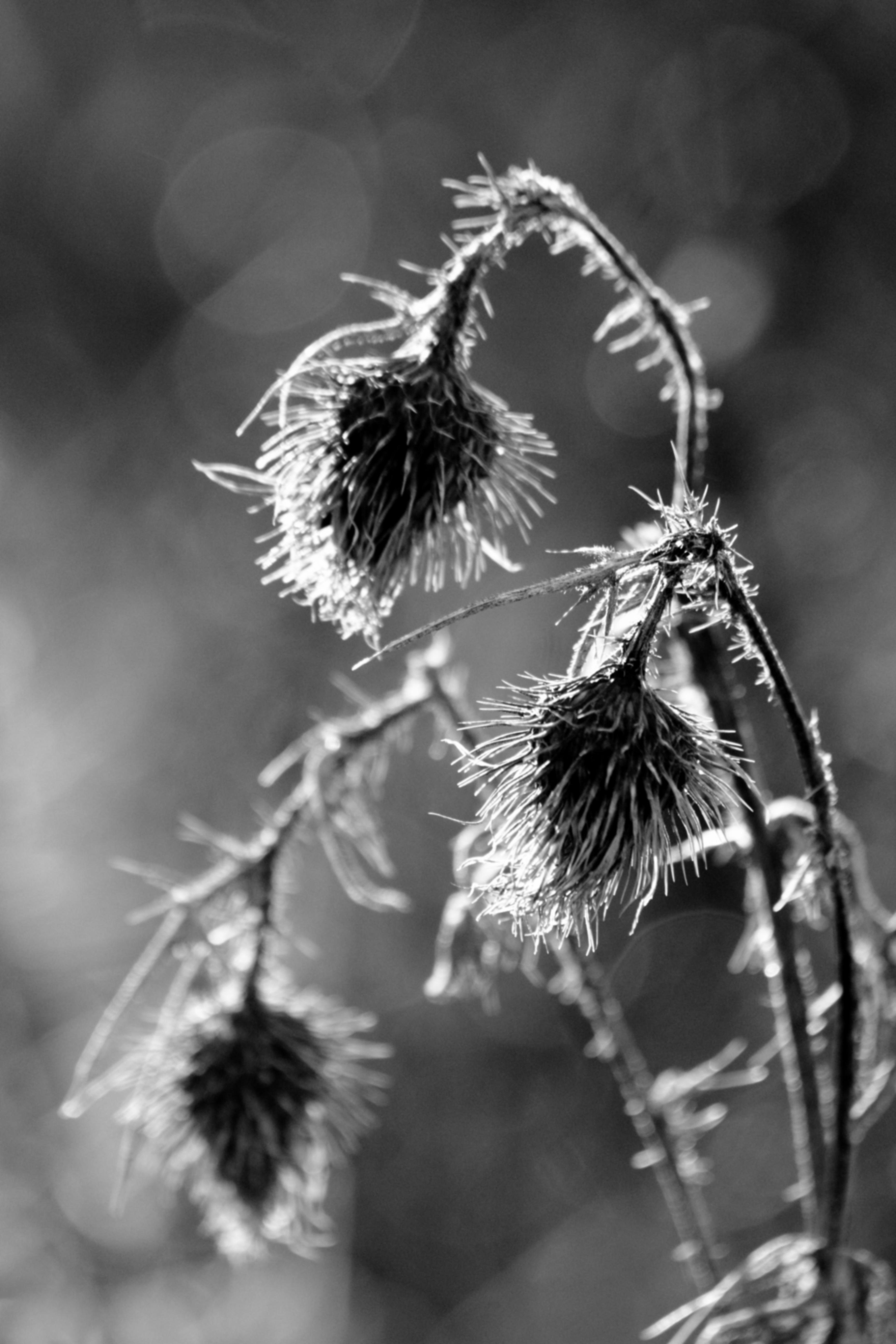 Black And Sharp White Needle 9