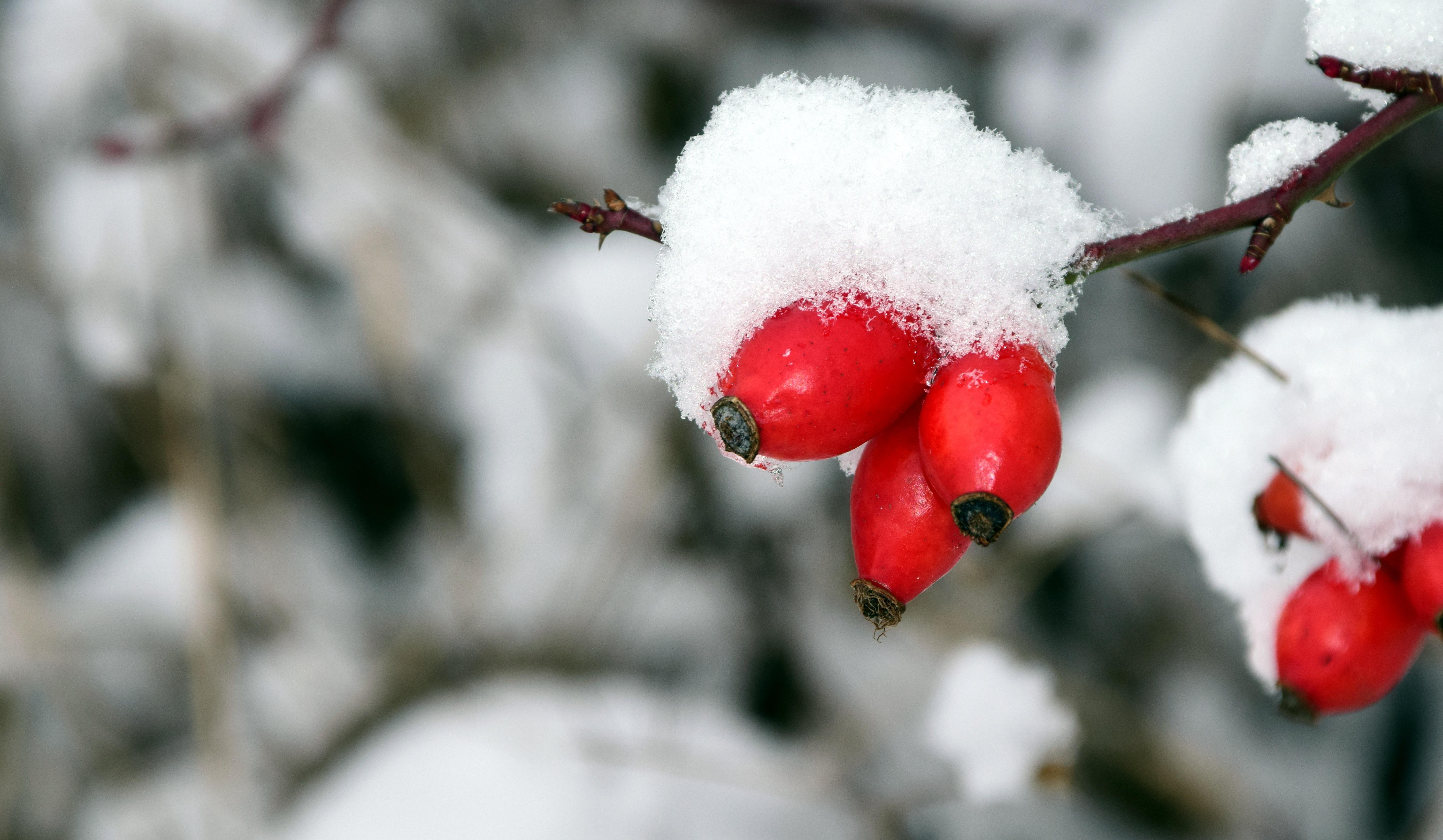 Цветы зимой картинки для детей, надписями прикольные