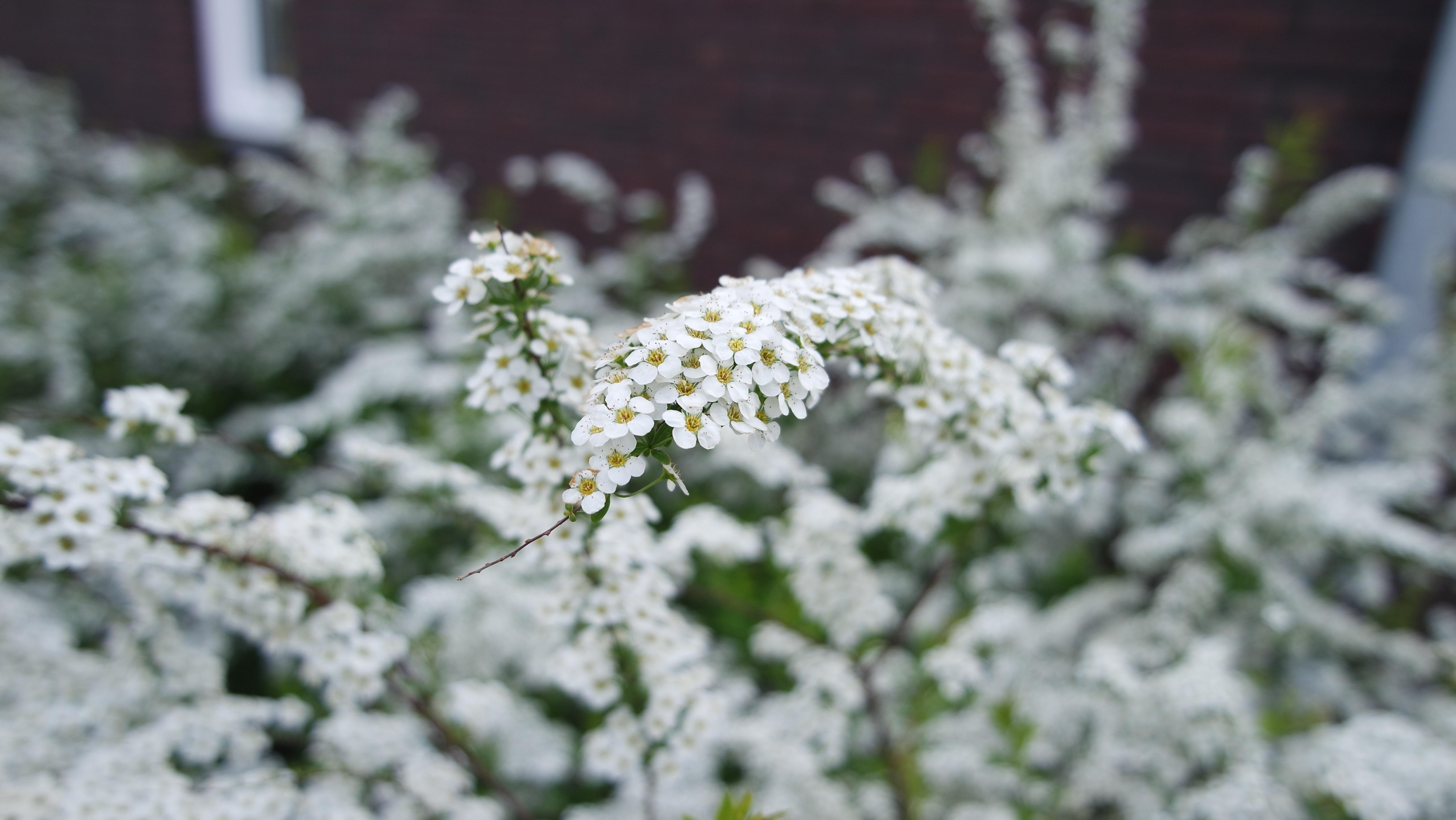 Fiori Bianchi Inverno.Immagini Belle Natura Ramo Fiorire La Neve Inverno Bianca
