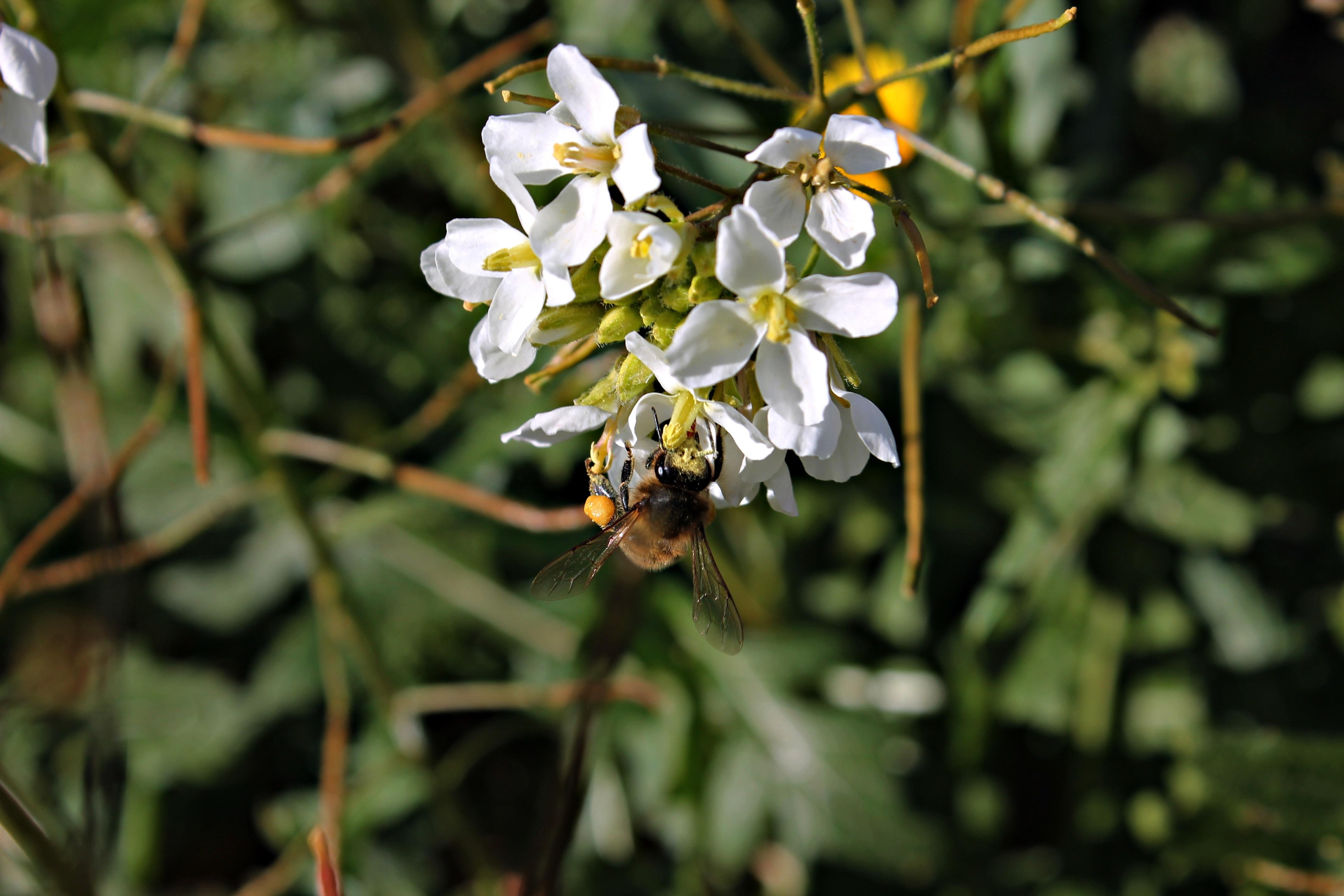 Images Gratuites La Nature Branche Hiver Feuille Mon Cheri