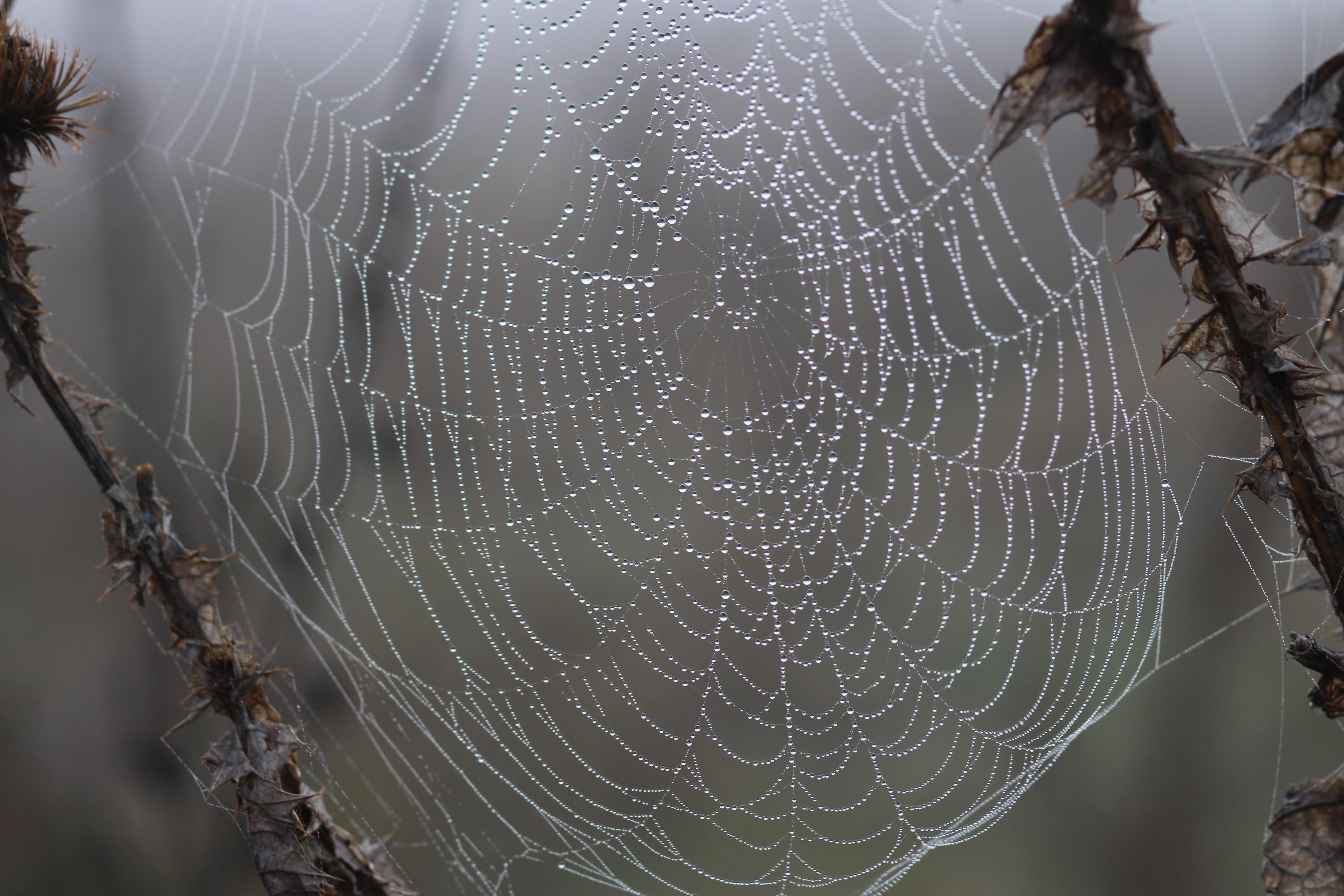 оказалось настолько красивые фото пауков в паутине сегодняшний день