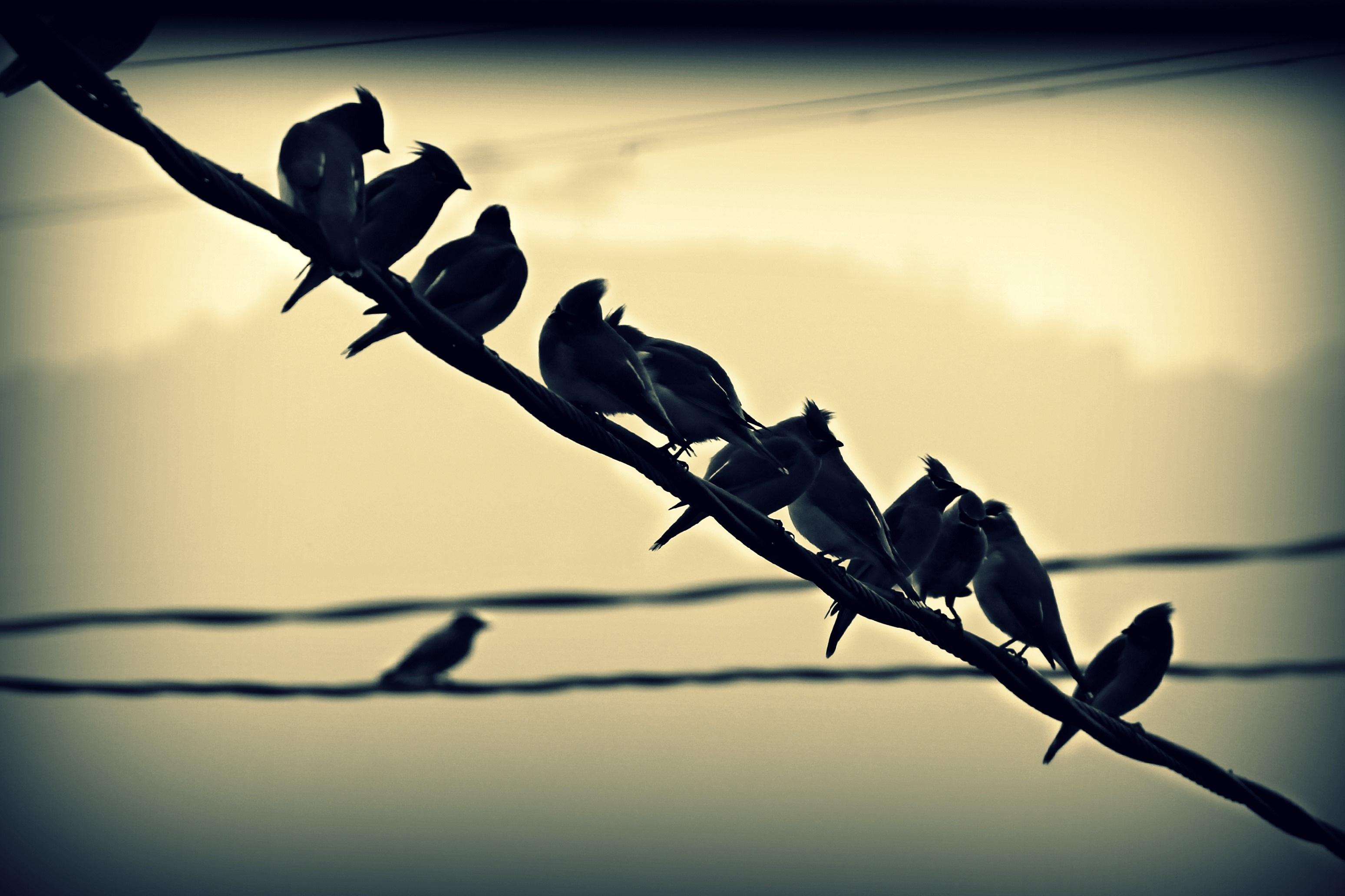 Kostenlose foto : Natur, Ast, Licht, Zaun, Stacheldraht, Gruppe ...