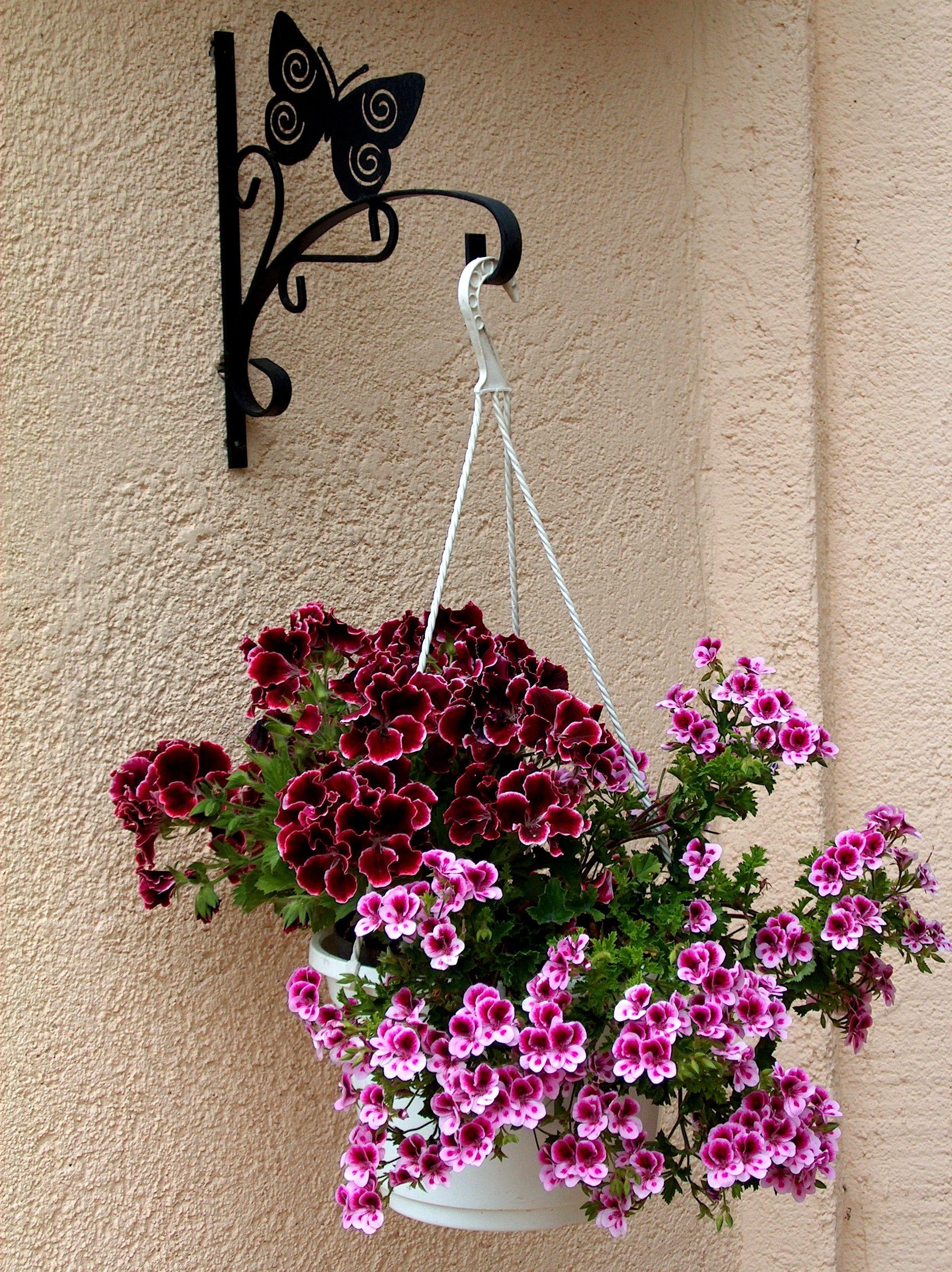 Fotos gratis naturaleza rama planta p rpura p talo for Diseno de plantas ornamentales