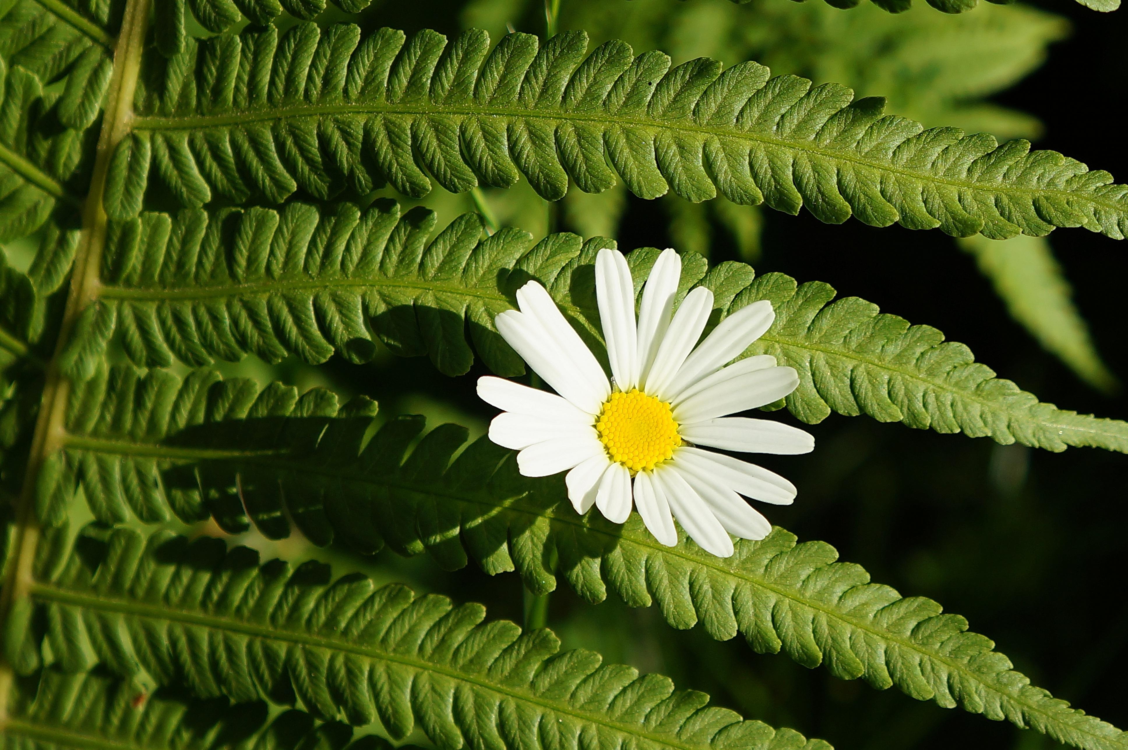 Цветы фото цветок папоротника