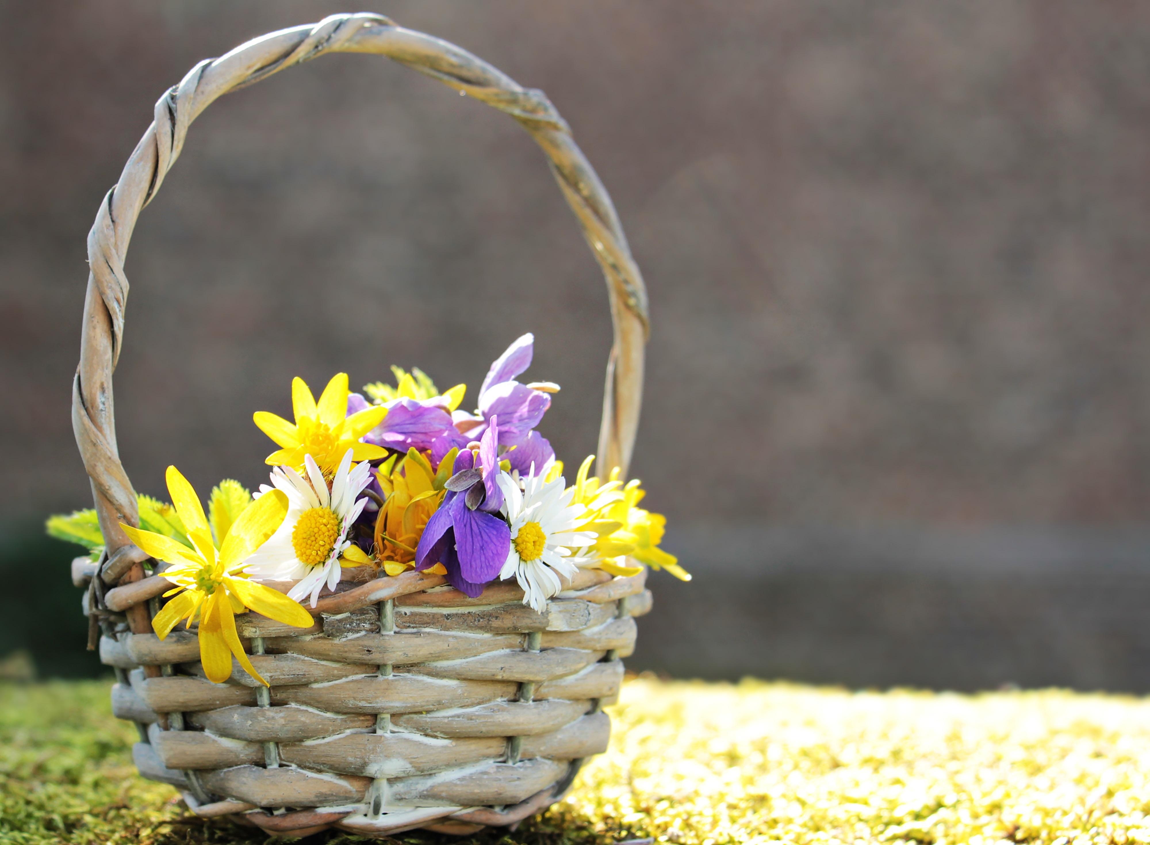 Цветы осень для поздравления фото 378