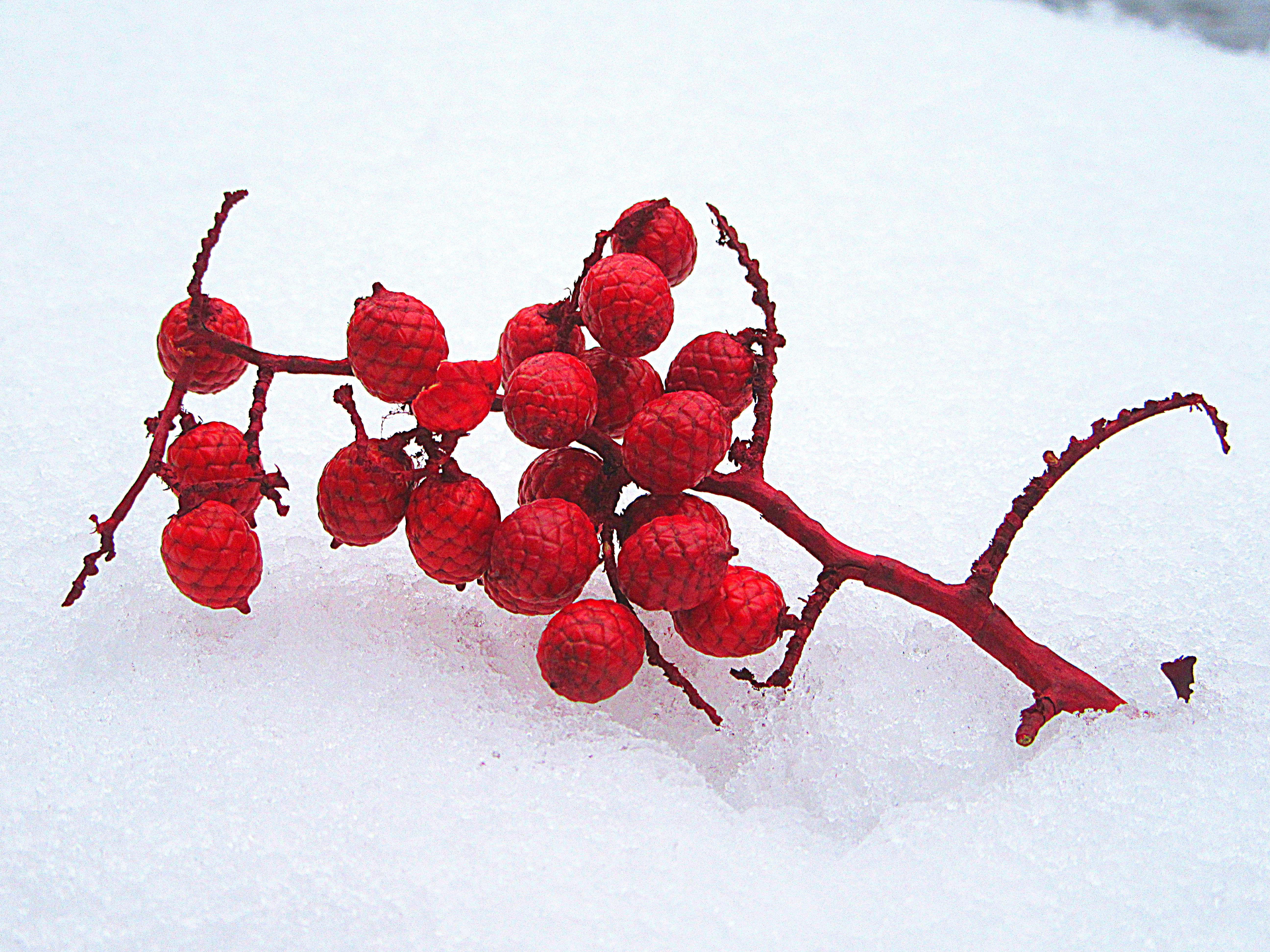 полюбившаяся рисунок из ягод на снегу фото последнее время андрей