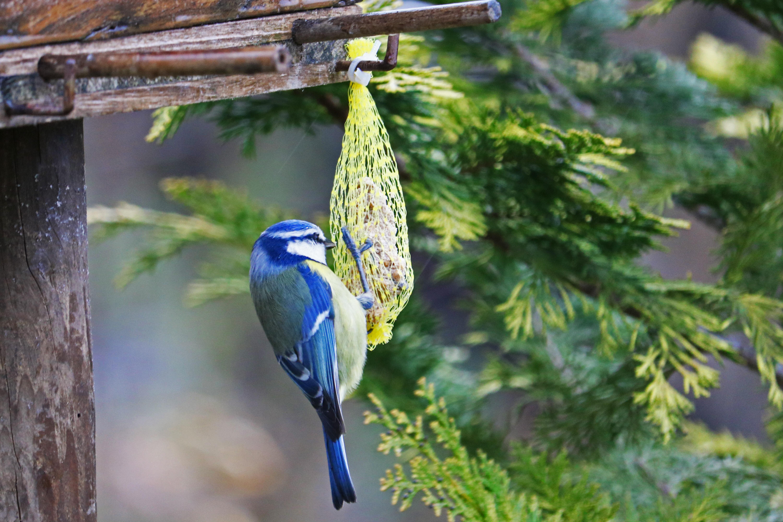 house an pole feeder babble popsicles blue feeders adorable diy bird turn plans into houses images astounding bluebird design
