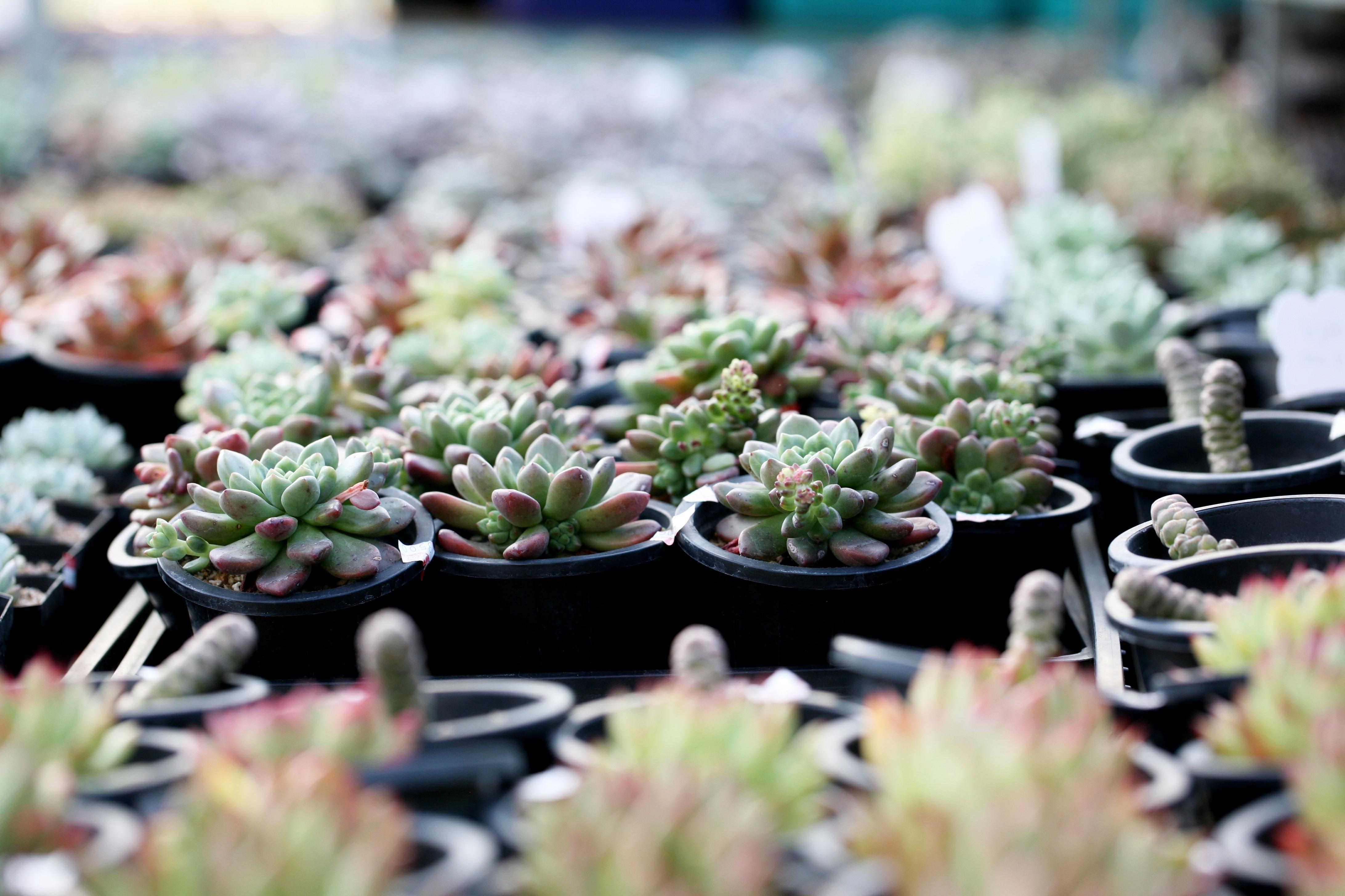 Gambar Alam Kaktus Menanam Botani Lezat Flora Rumah