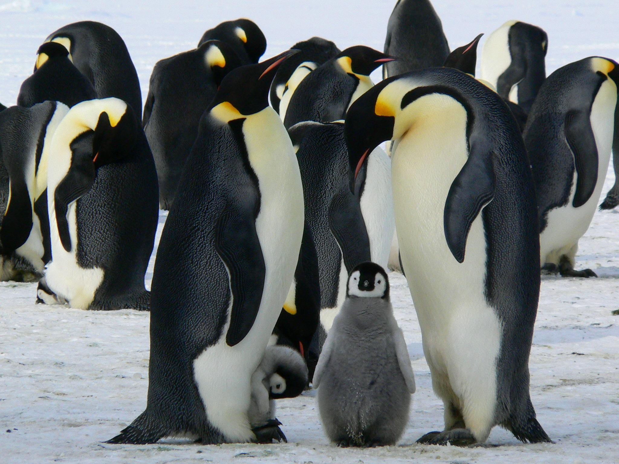 Fotos concentracion pinguinos 2012 75