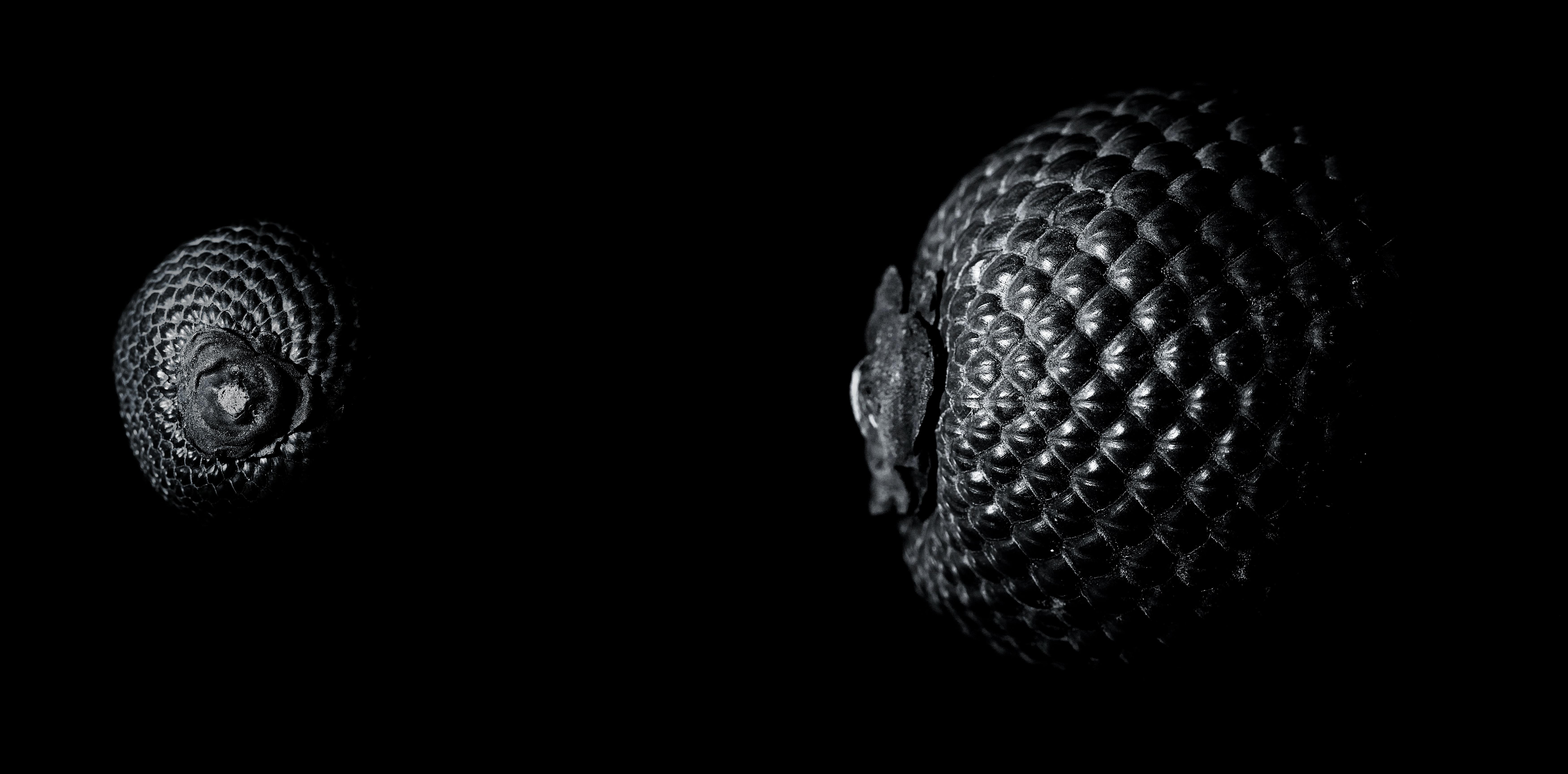 Hình ảnh Thiên Nhiên Sáng Tạo đen Và Trắng Trái Cây