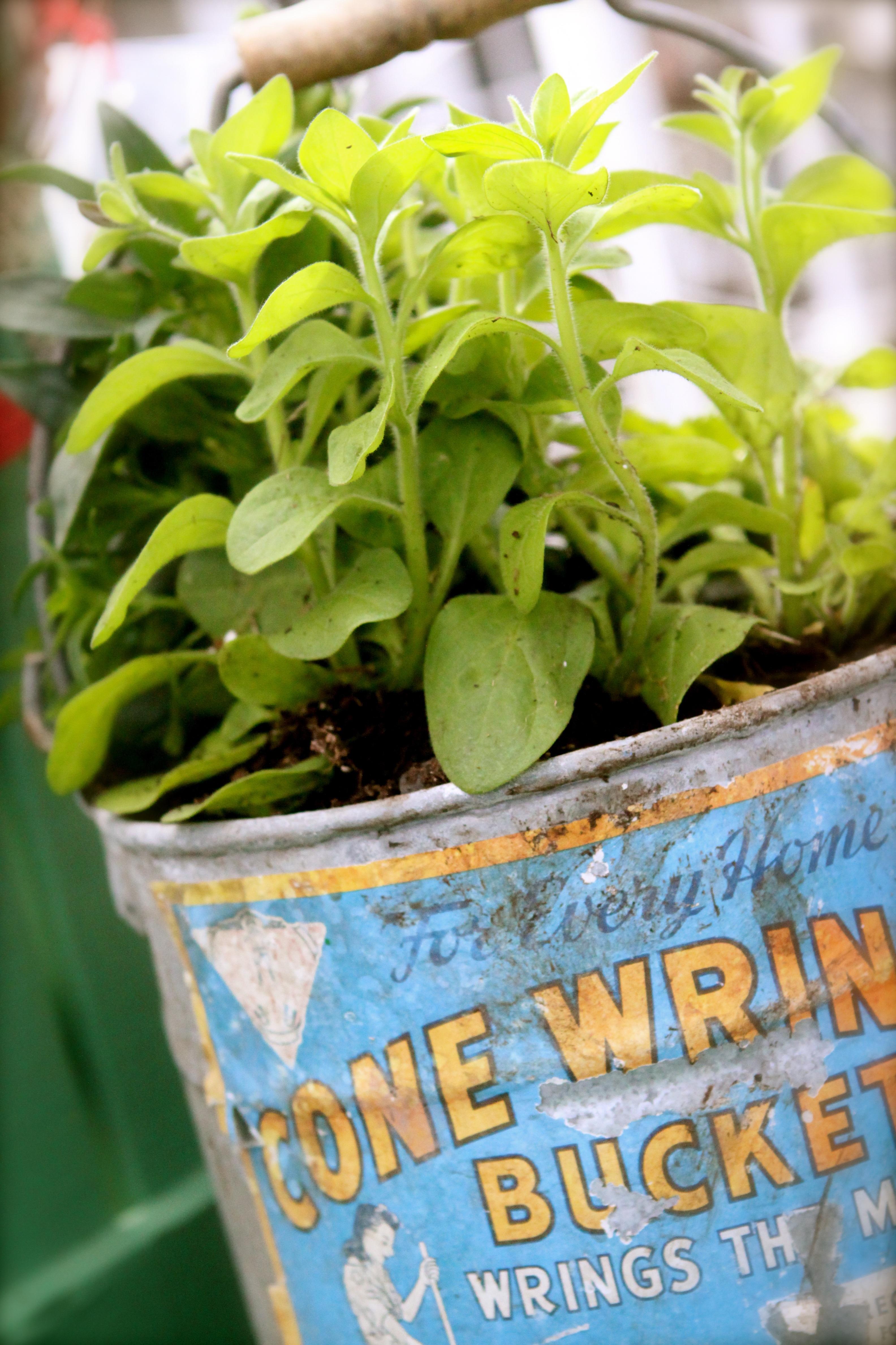 free images : nature, creative, plant, wood, vintage, flower